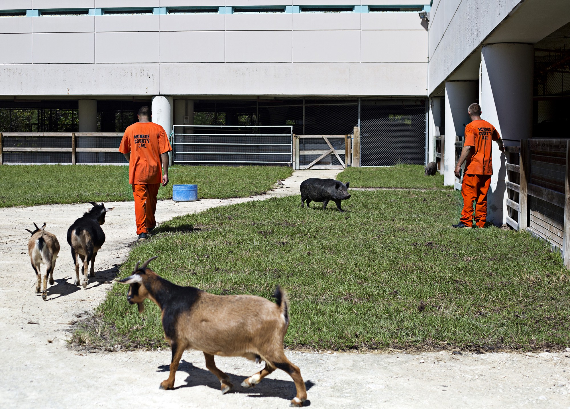 Inside the Florida Jail that Doubles as an Exotic Animal Zoo