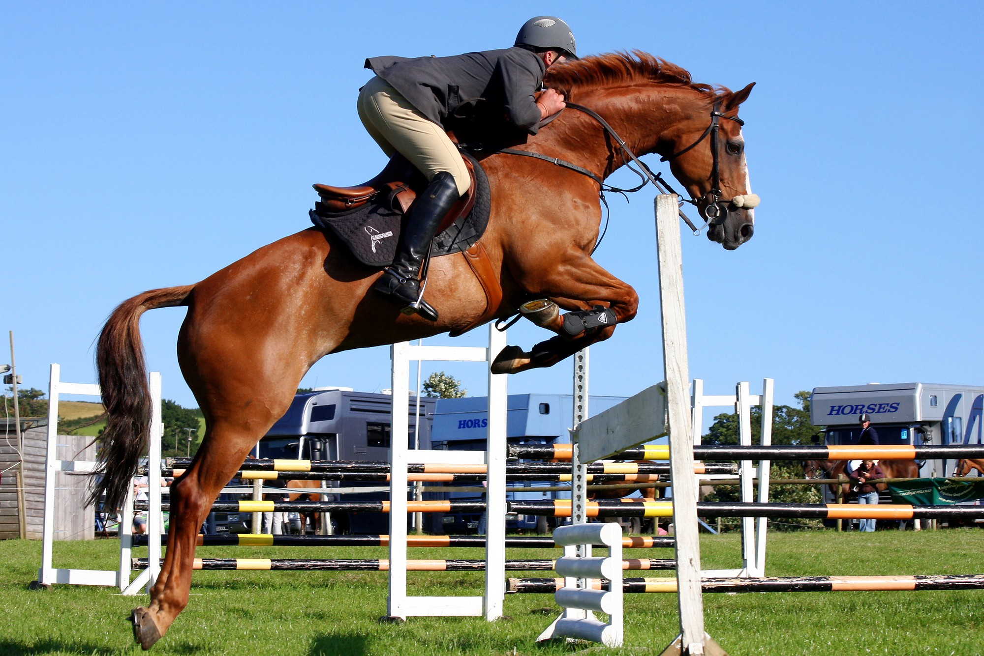 Common Riding Disciplines For Adults By Rider For Life Medium