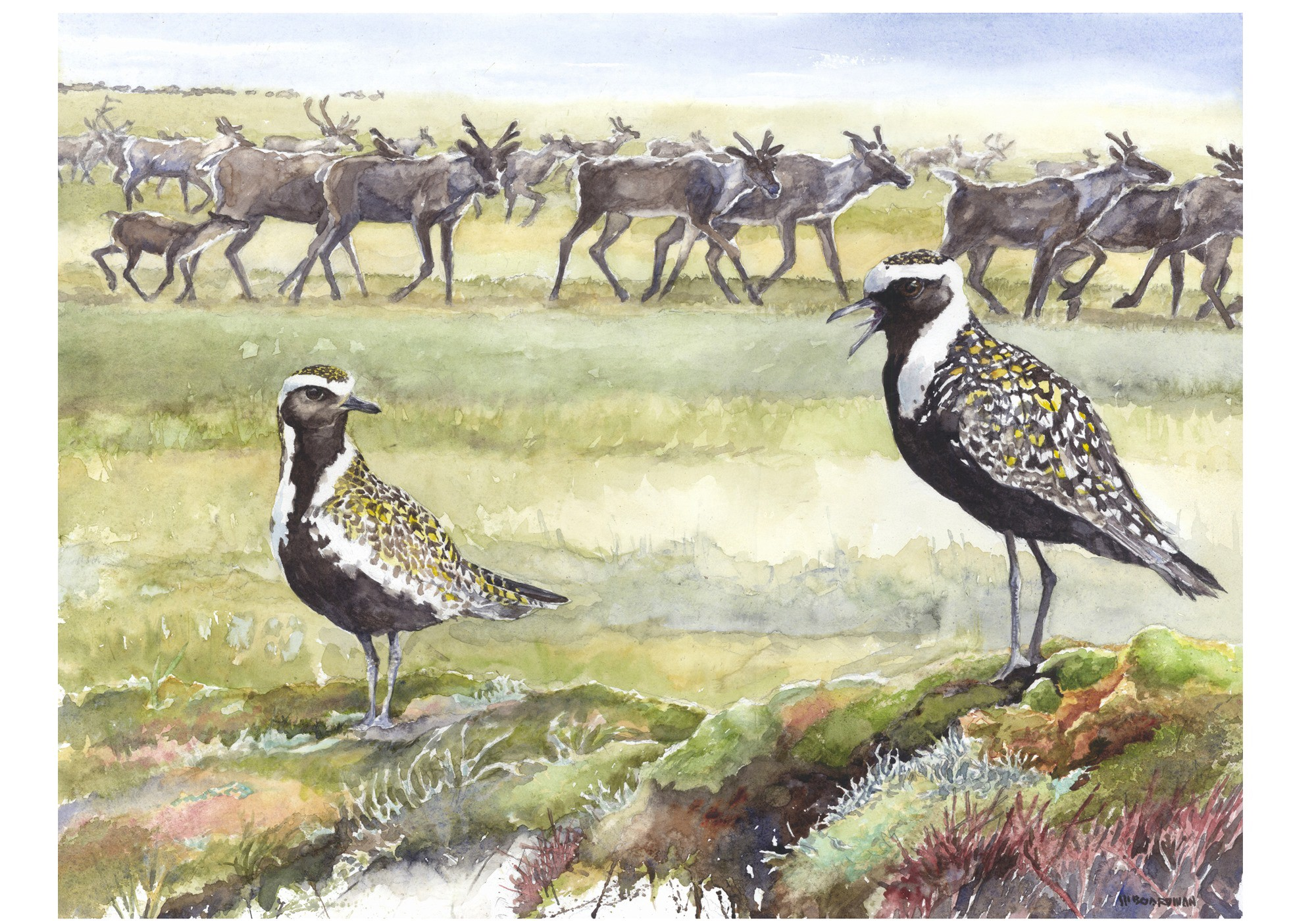two shorbirds in the foreground with a heard of caribou in the background