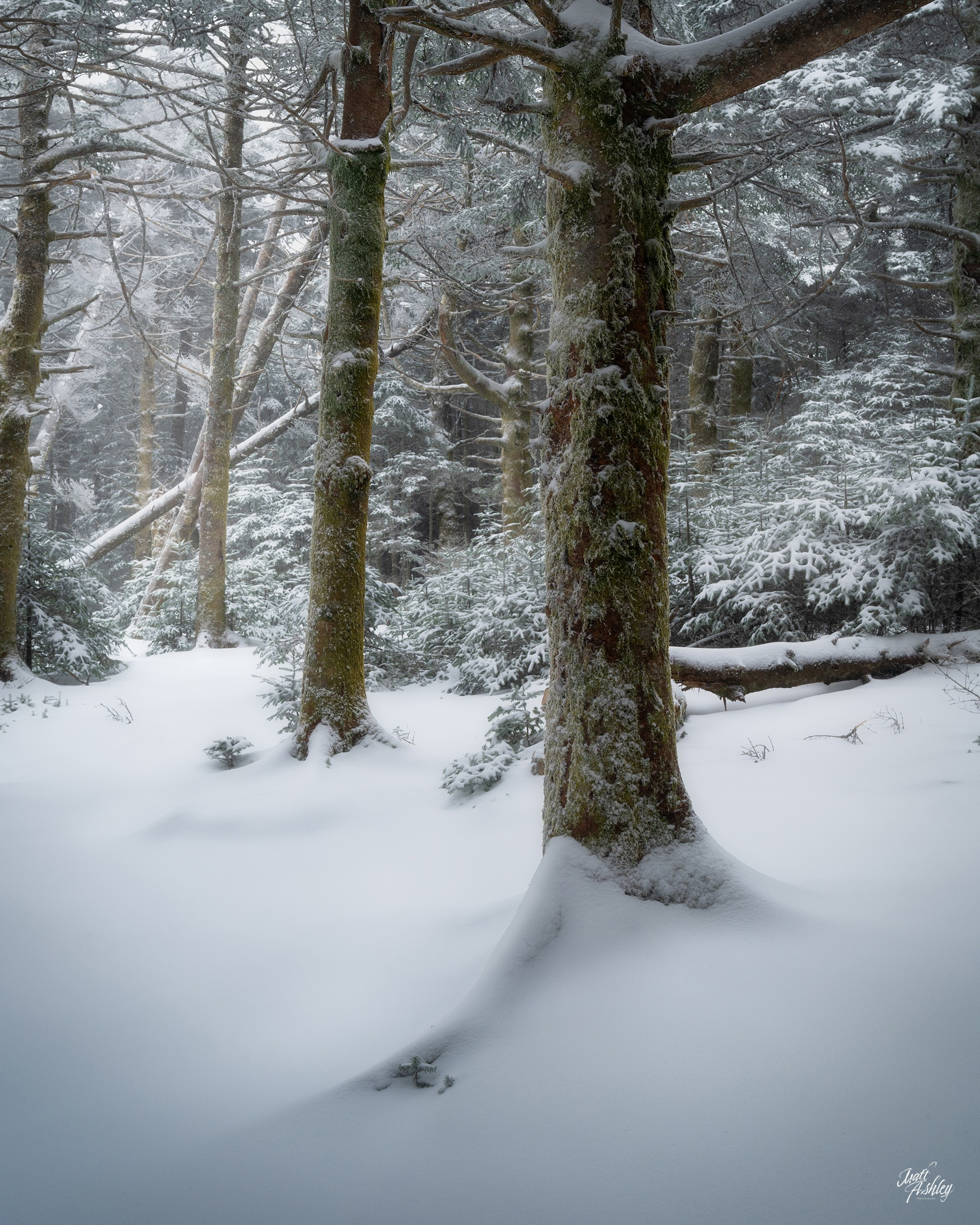 Snow covered woodland scene.