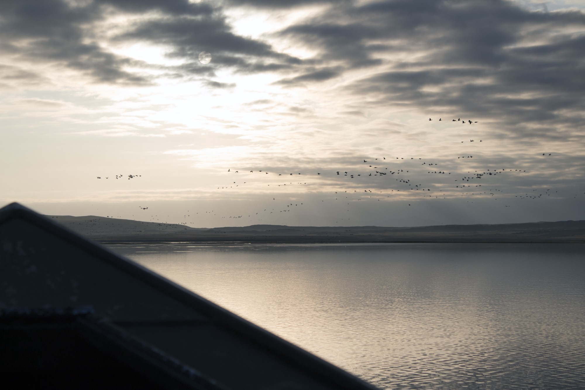 sunrise featuring brant in the distance flying over a body of water, photo taken from a boat, bow is visible