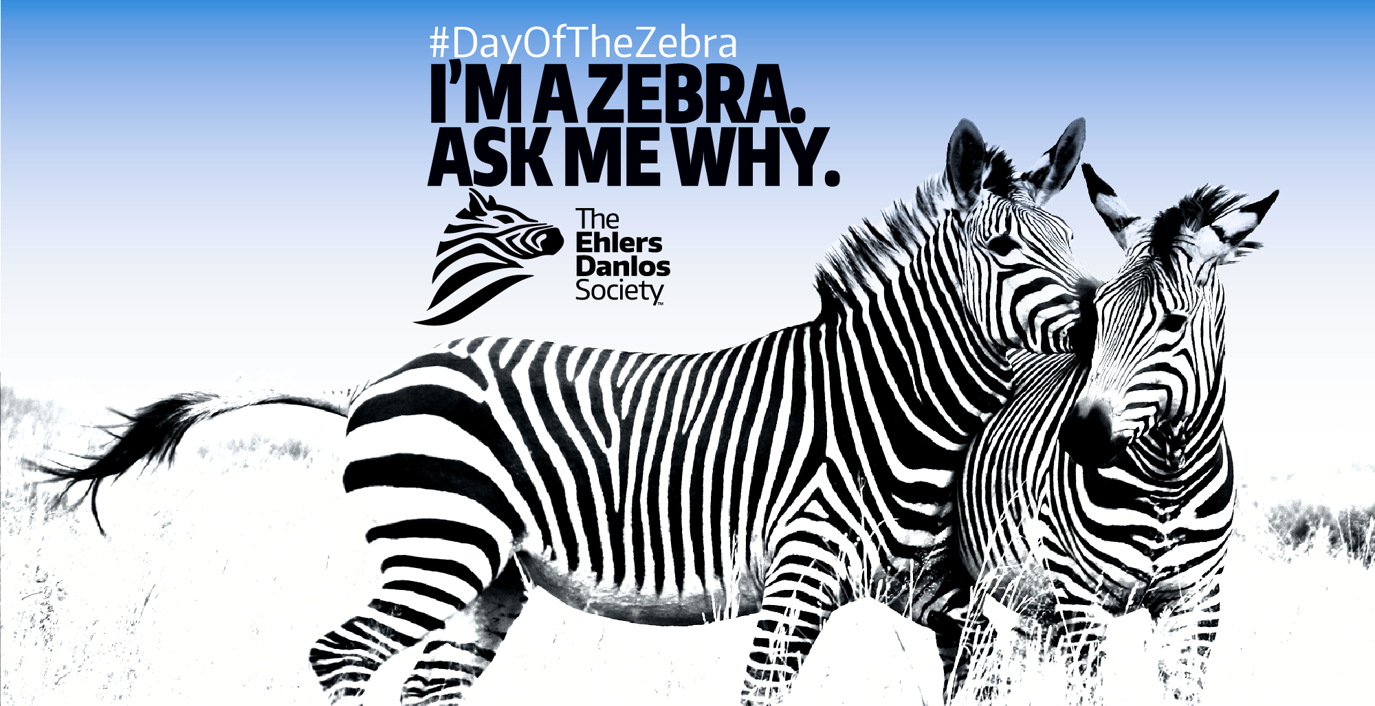 Two zebras next to each other along with #DayOfTheZebra I'm A Zebra. Ask Me Why. The Ehlers Danlos Society