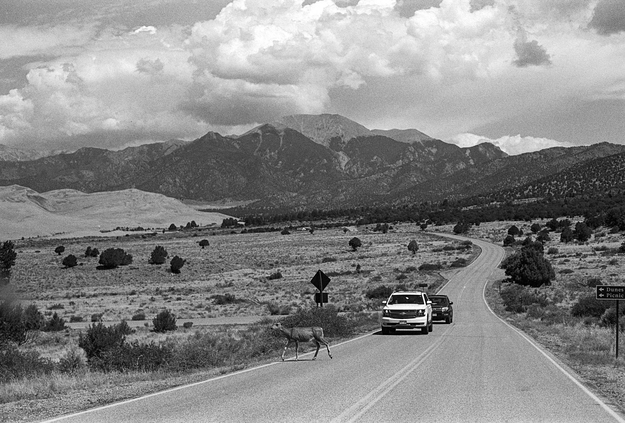 Black and white photo of a deer crossing a highway while cars wait, with mountains in the background (Colorado)