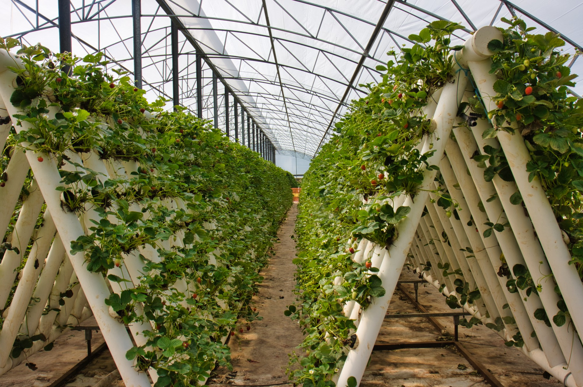 Time to rethink hydroponics?. In a time when pandemic, climate change… | by  Russ Grayson | PERMACULTURE 3.0 | Medium