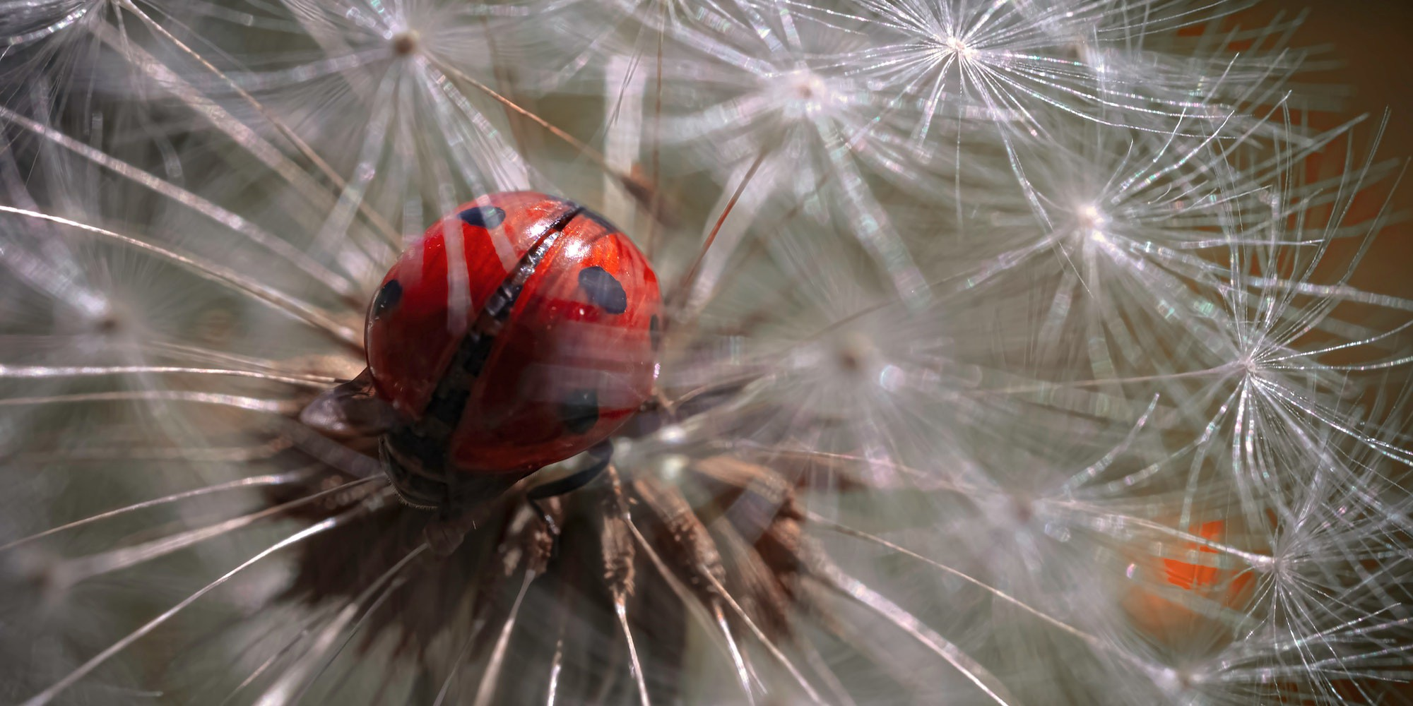 Cover photo of a lady bug close up
