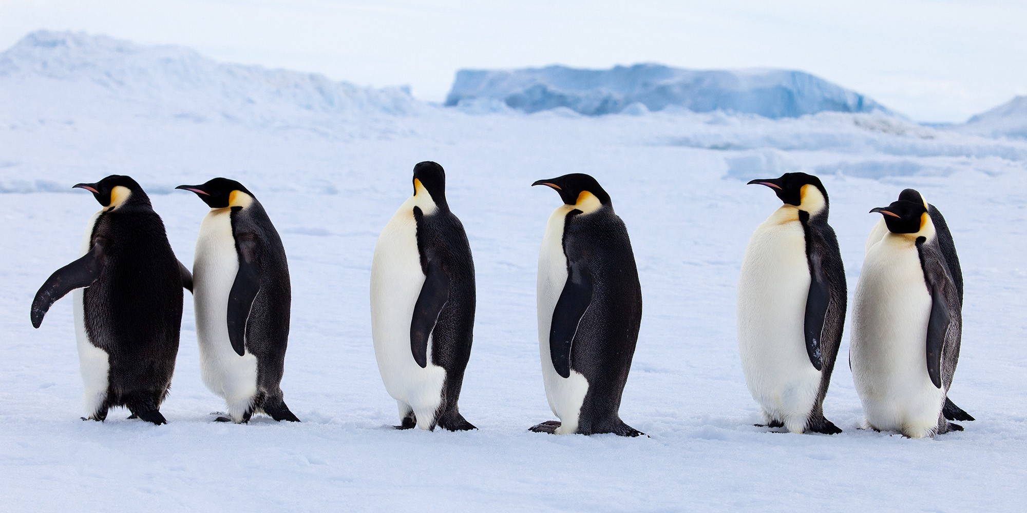 Confused penguins wondering where their component has gone.