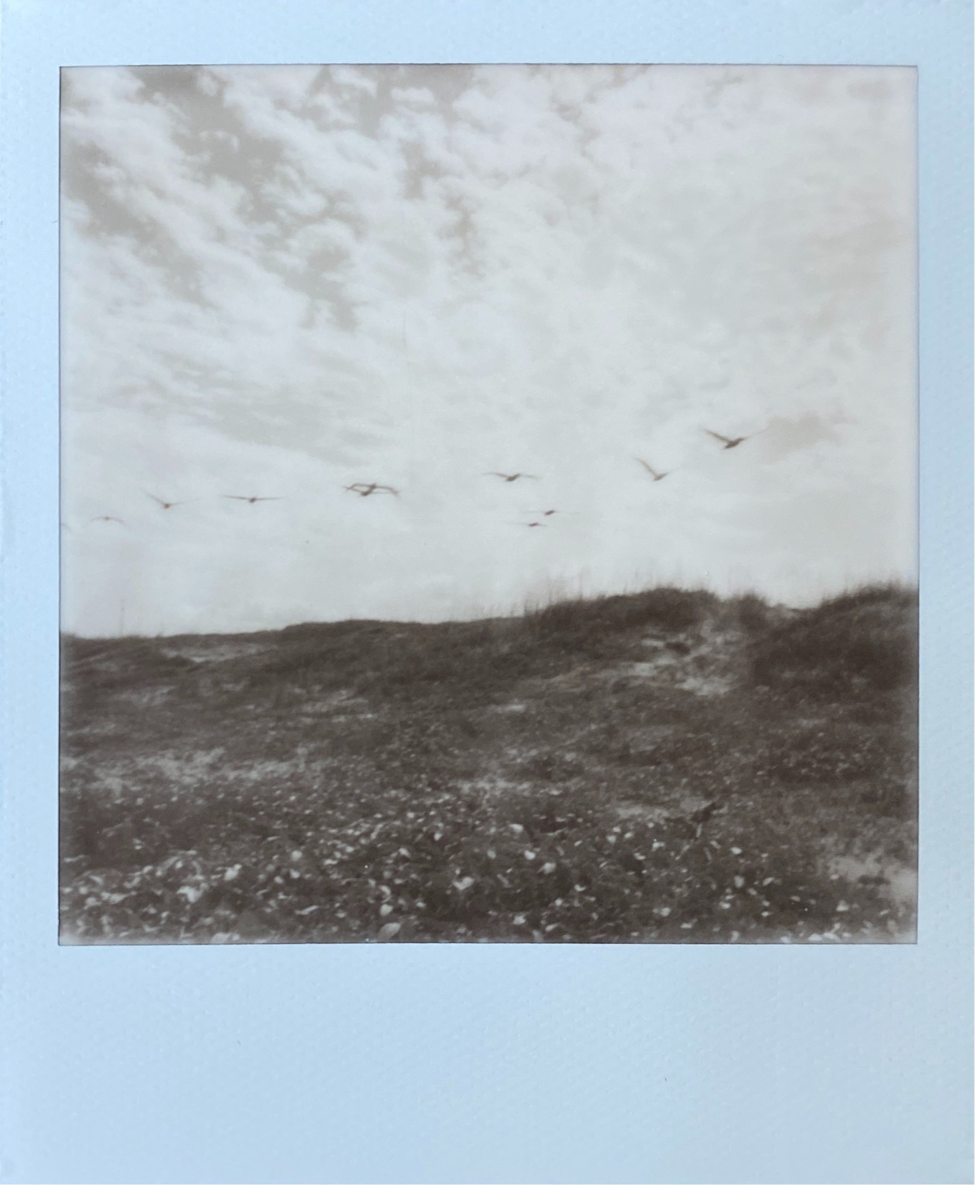 Black and white Polaroid photograph of a line of pelicans flying over dunes on the beach, clouds in the background