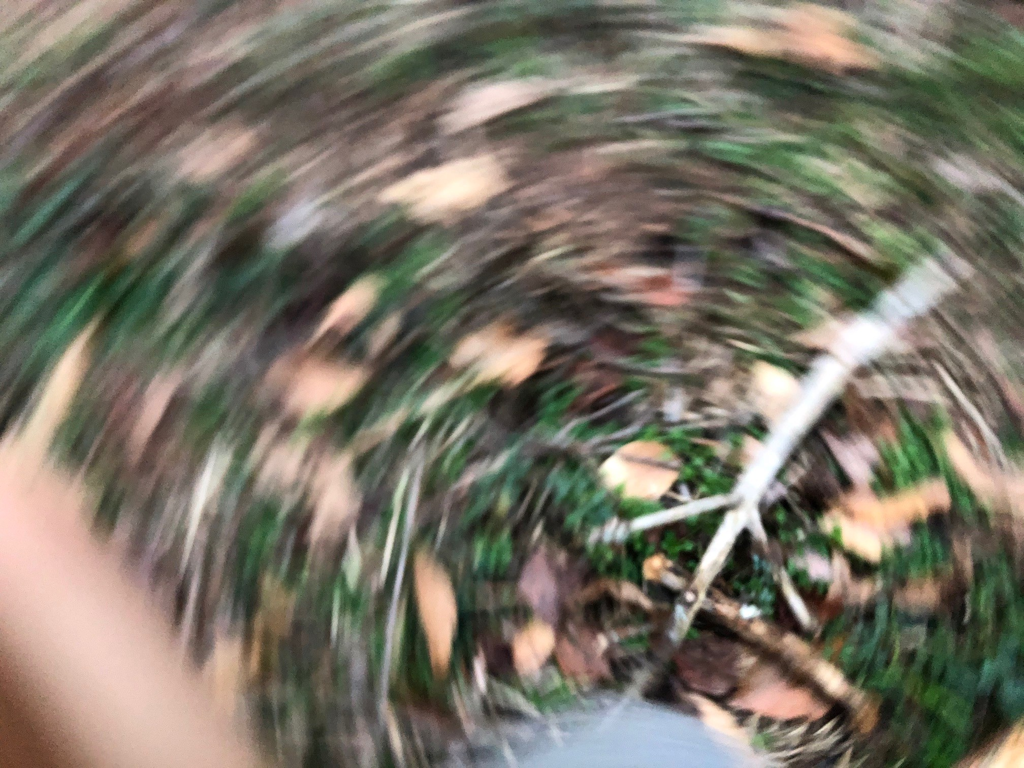 The photo shows a swirl of leaves, grass, a stick, all blurred by the phone moving as the photo was being taken.