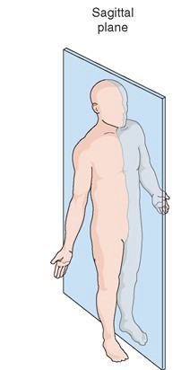 Sagittal Plane divides the body into left and right part