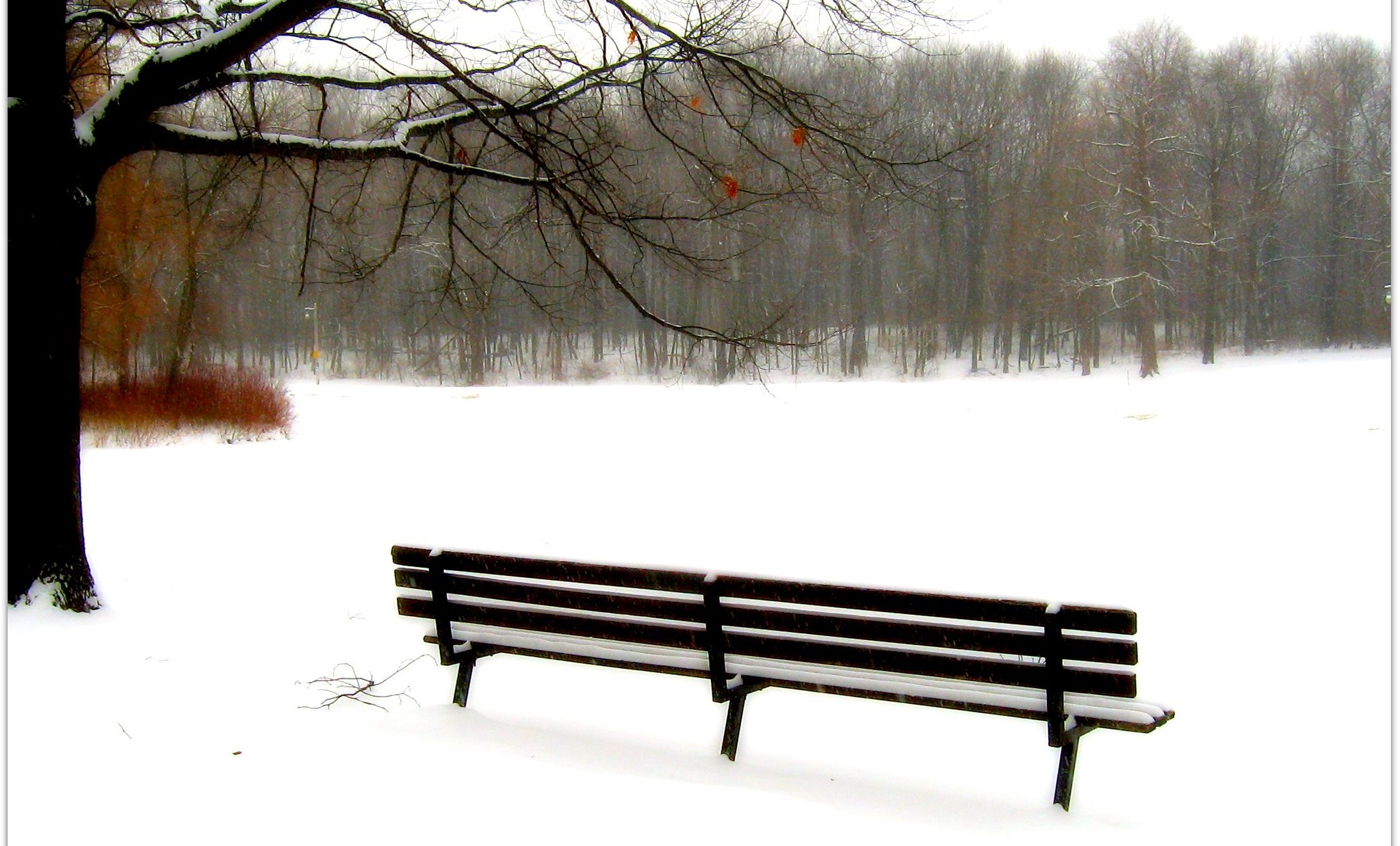 Empty bench in snowy scene with bare trees.