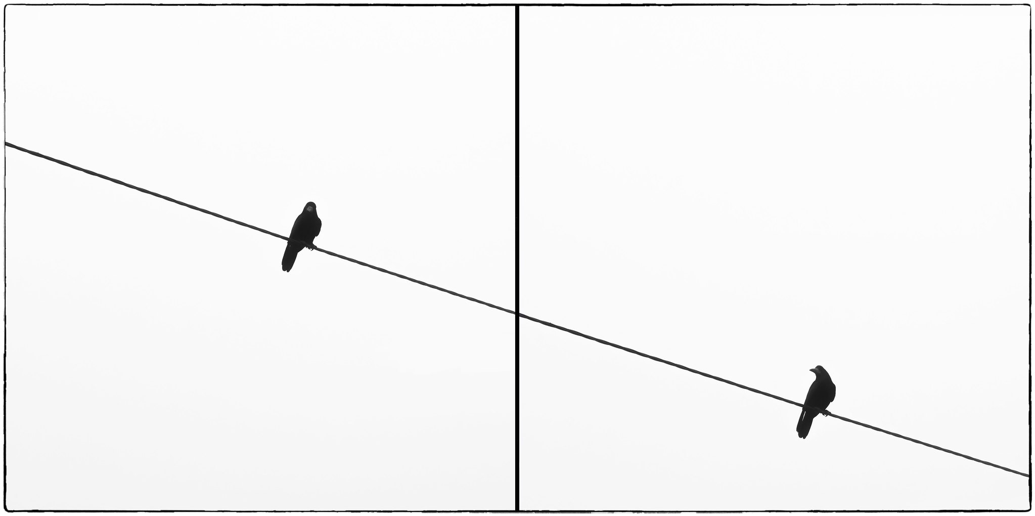 Two pictures of a bird on a wire looking back at itself.
