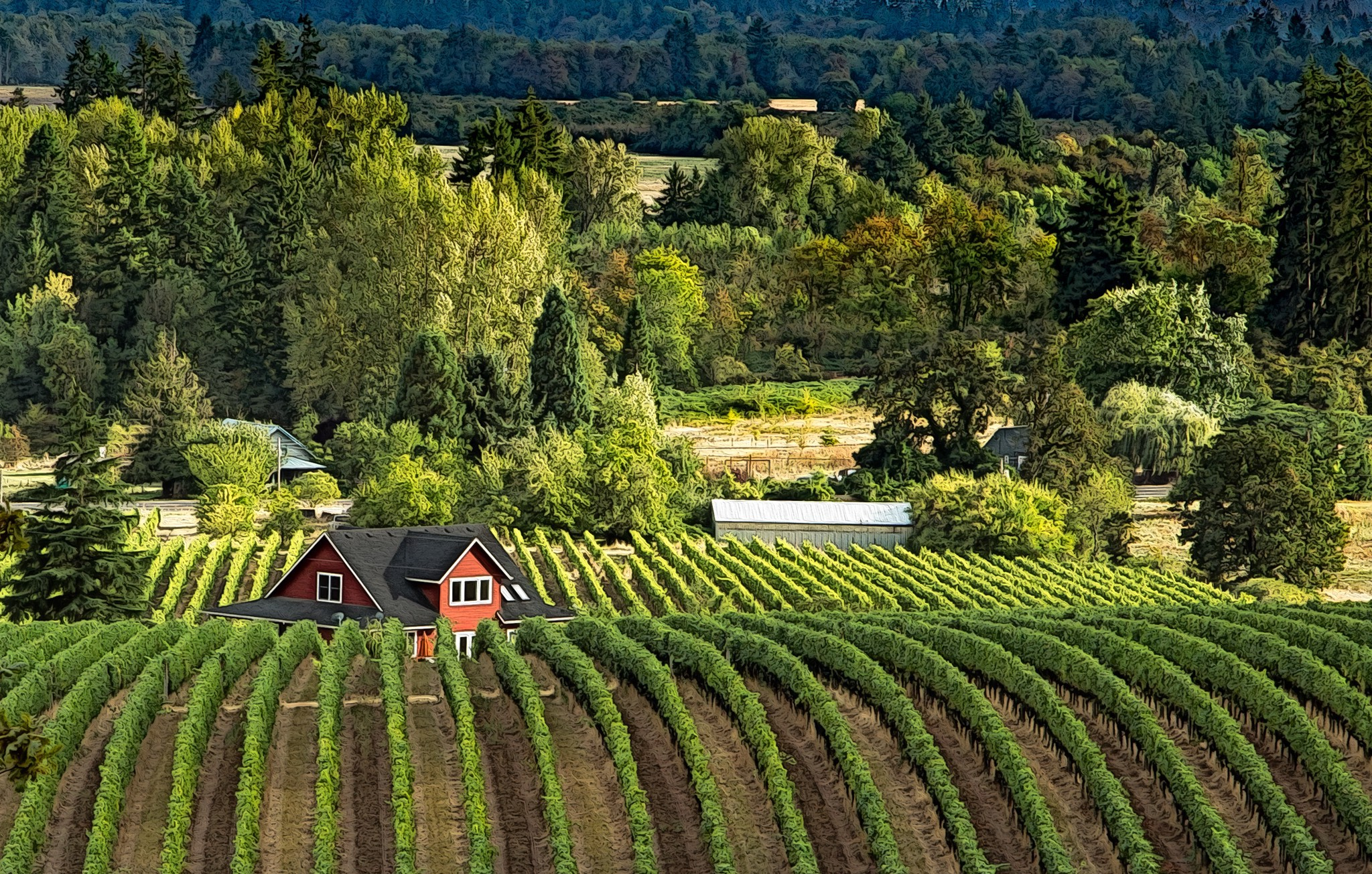 Lush green landscape in the Willamette Valley surrounding a vineyard