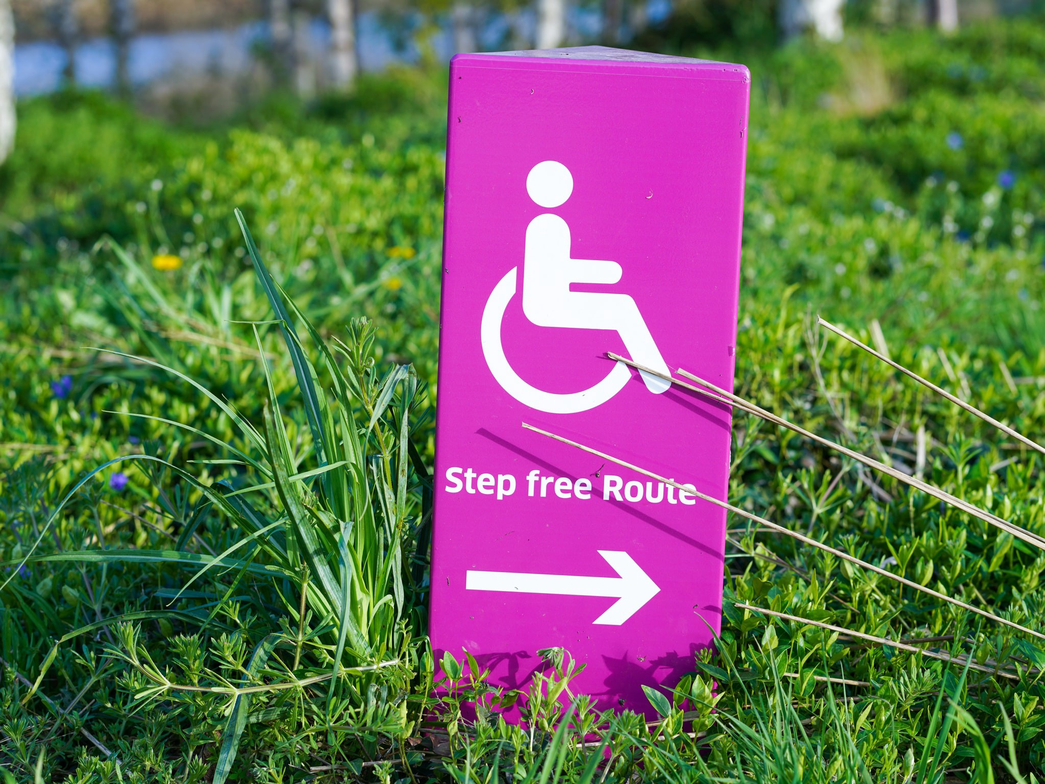 green grass holding a bright pink sign with wheelchair icon and an arrow pointing to the right, indicating a step free path