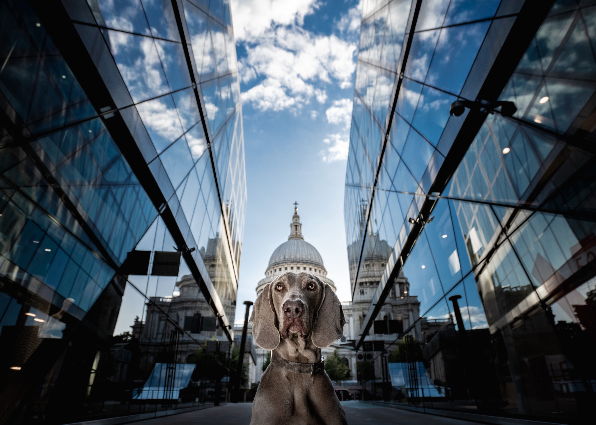 A dog appears posed in the street, shot from below and appearing to be wearing a capital building as a crown