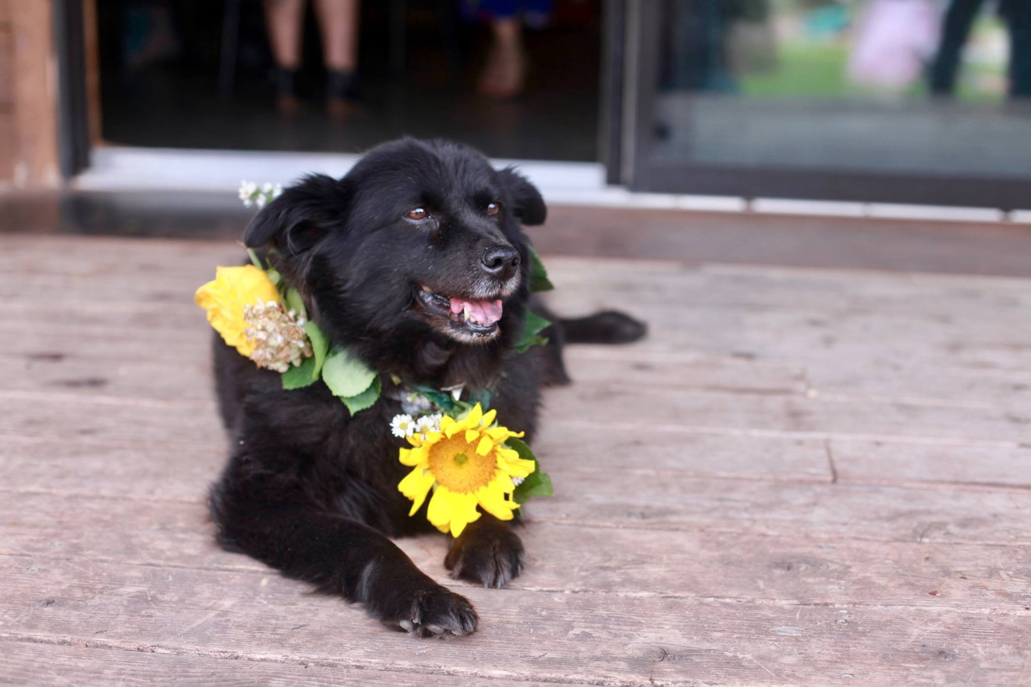 Jessie wears a lei made of yellow flowers and smiles while laying on a porch