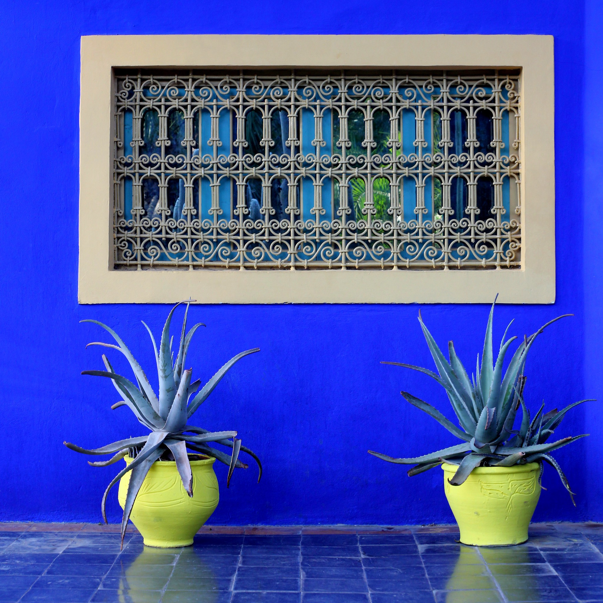 Bright blue colored wall with beige window and Aloe Vera plants in yellow flowerpots.