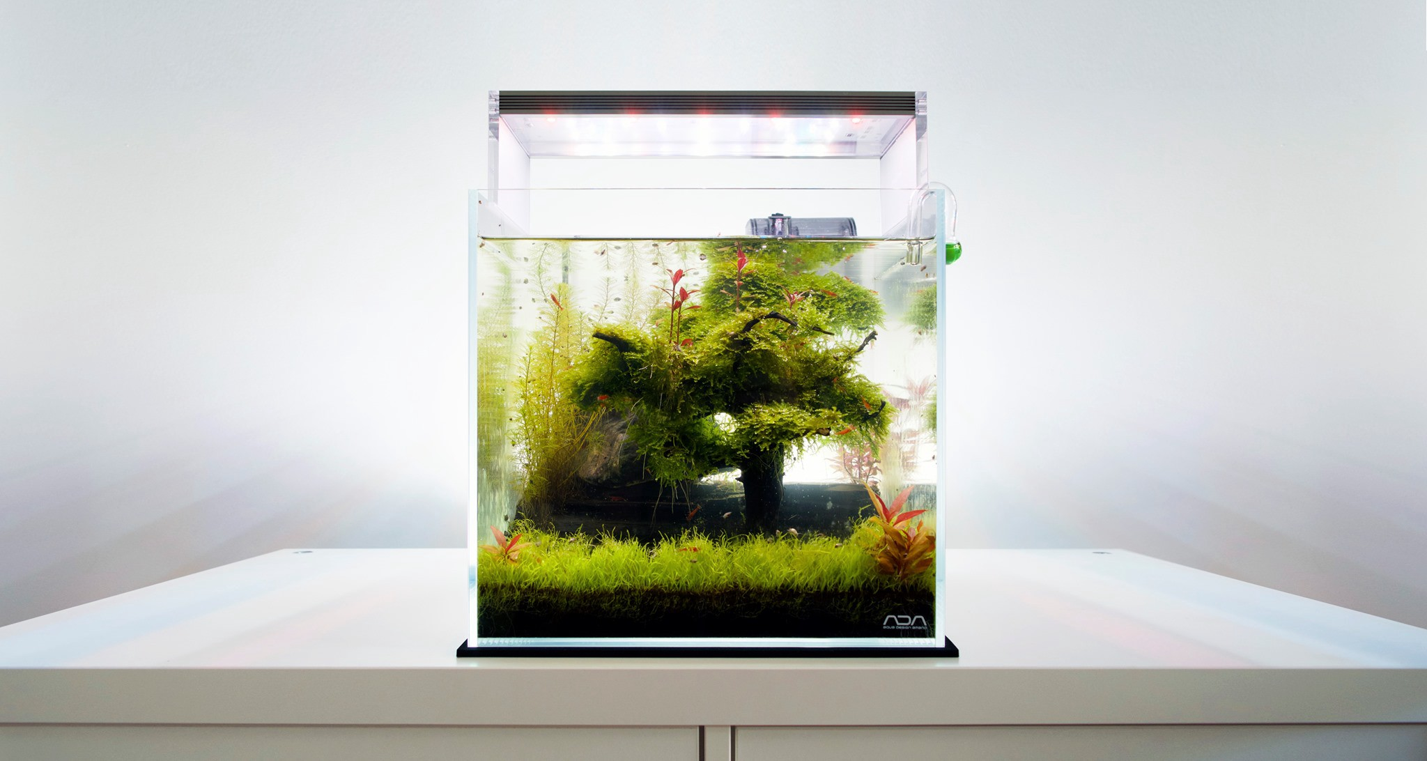 The Simplicity Of Aquascaping Basics And Requirements By Kc Muller Simplicity Medium