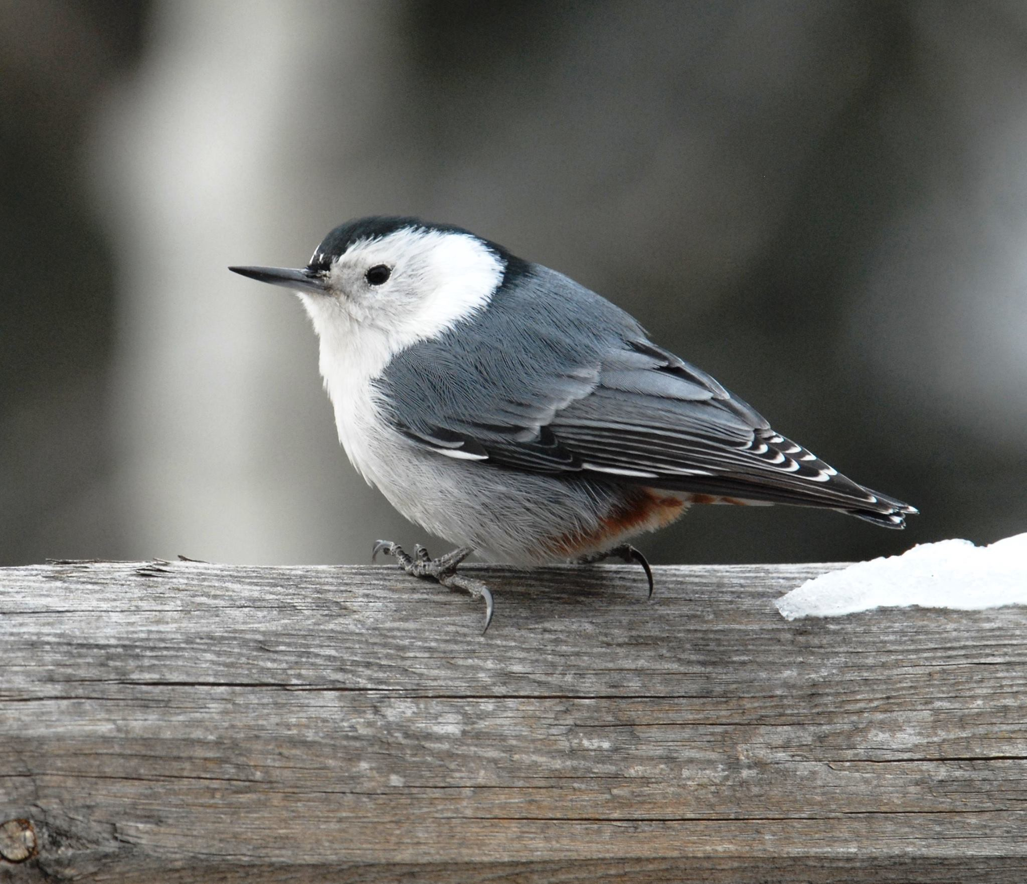 Six Winter Birds You Re Likely To See By U S Fish Wildlife Service Updates From The U S Fish And Wildlife Service Medium
