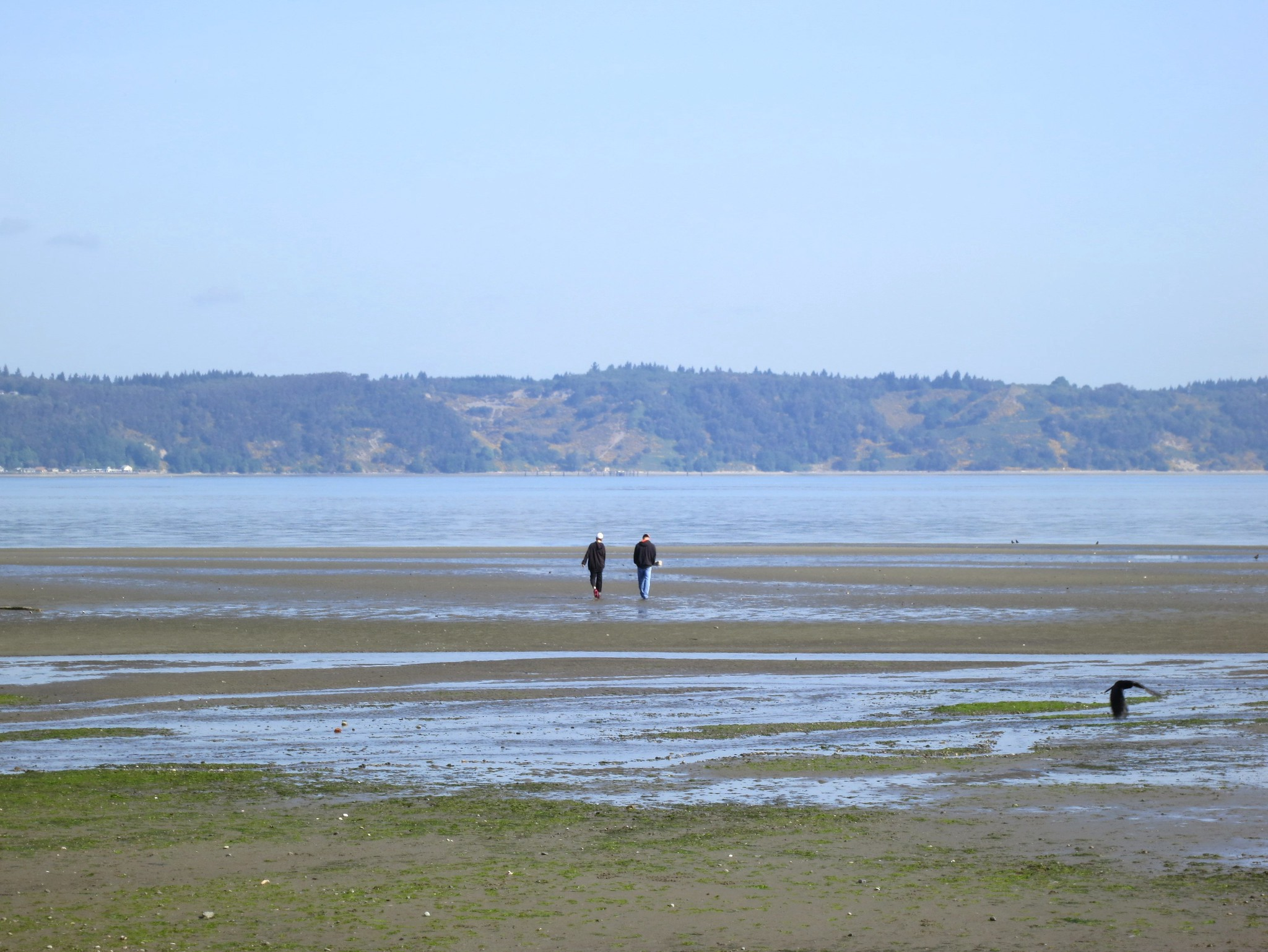 Photo of two people strolling along the beach at Dash Point, Washington, at low tide. Photo credit: Ruth Hartnup.