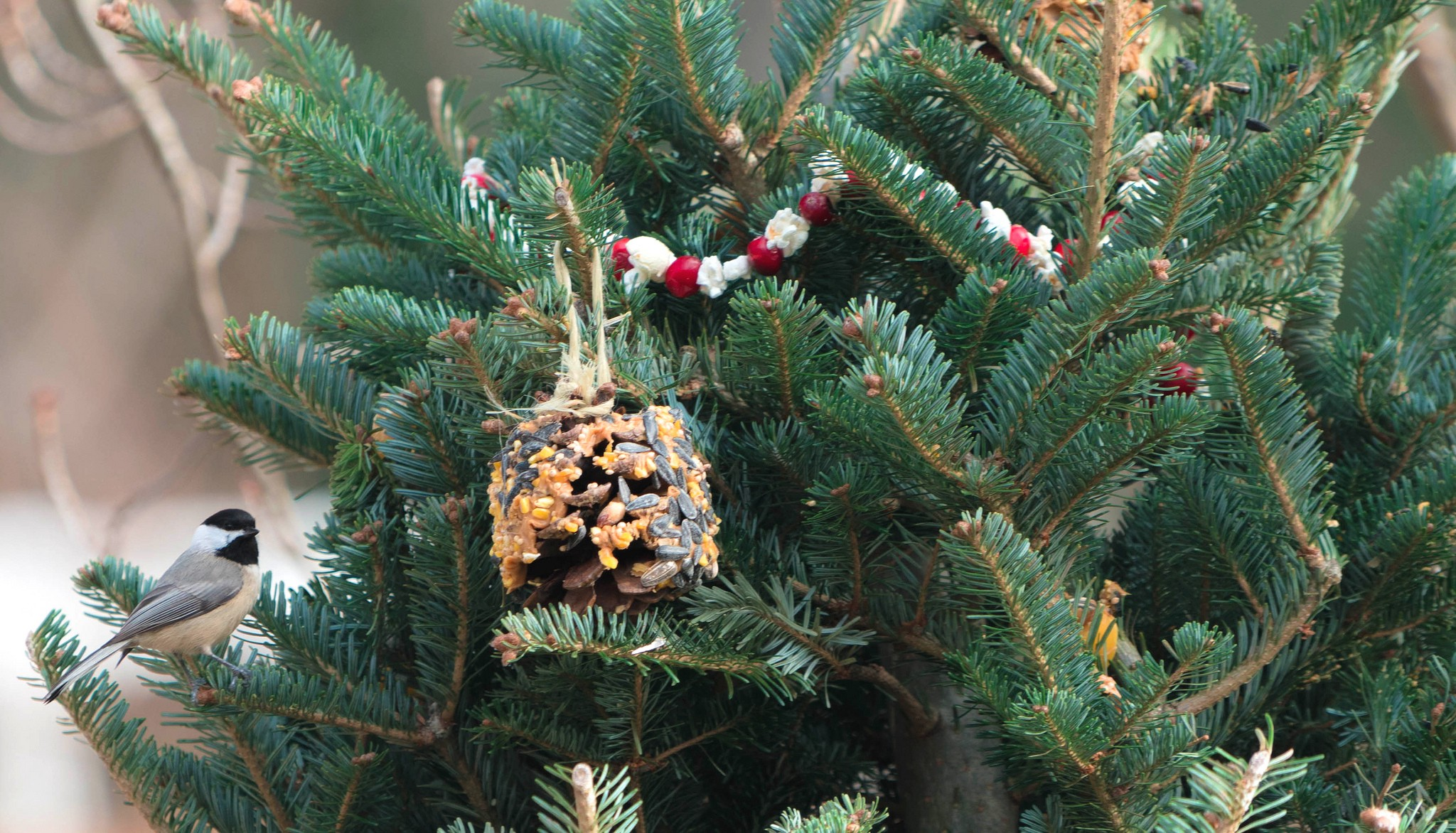 Christmas Trees Images.Recycling Christmas Trees For Wildlife Updates From The