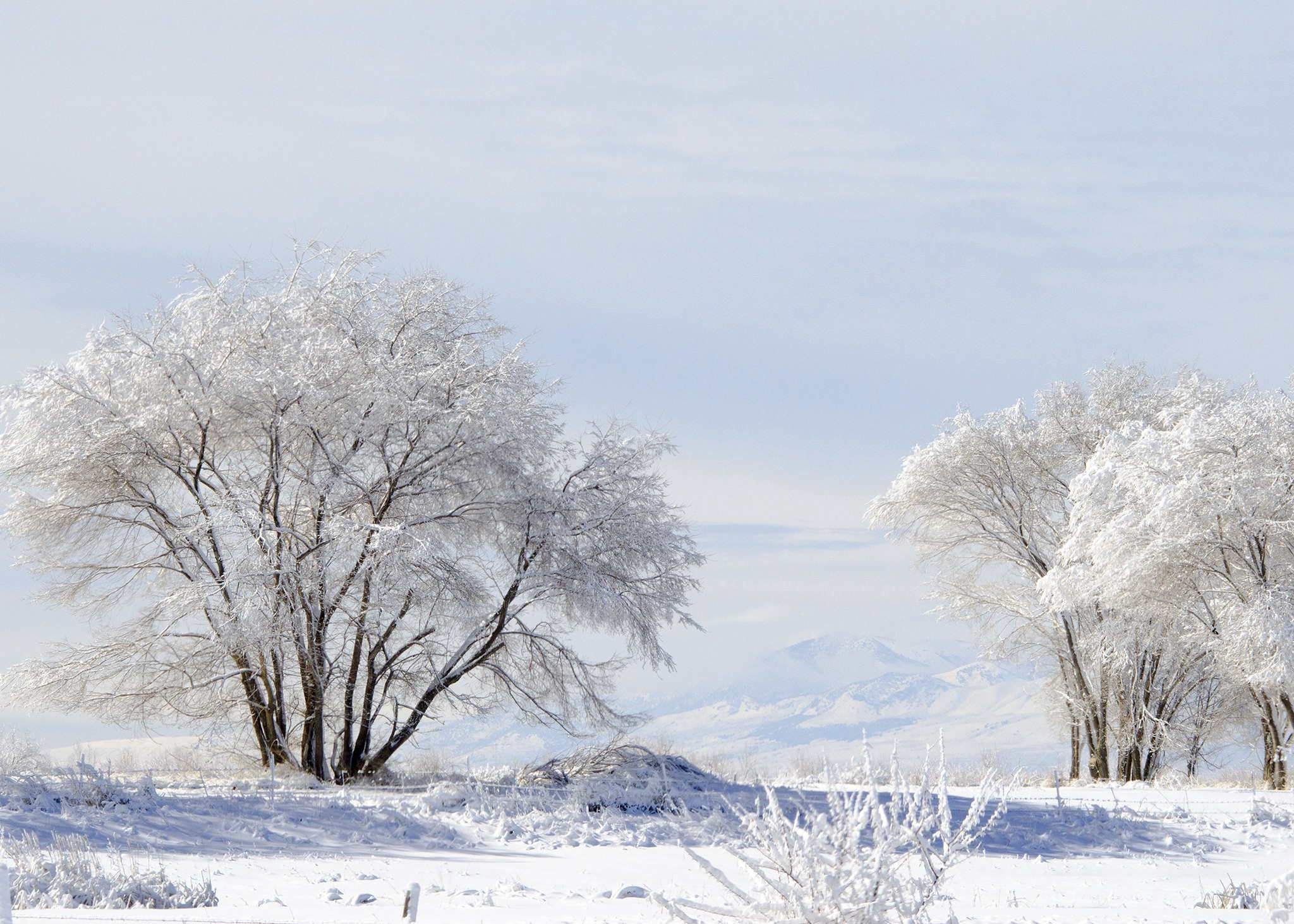 Landscape photo of trees and ground covered in snow