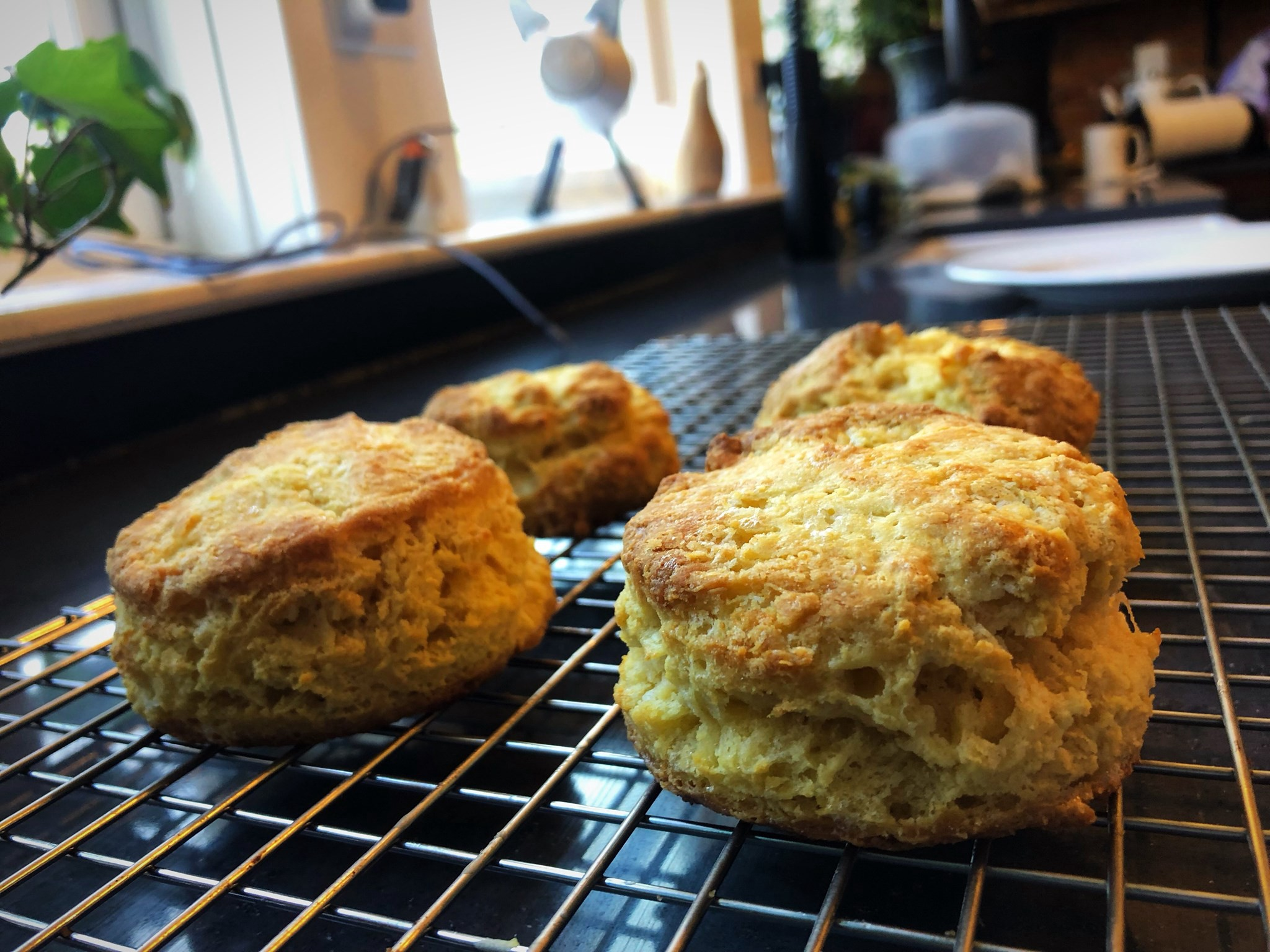 Four delicious biscuits cool on a wire rack in the morning sunlight