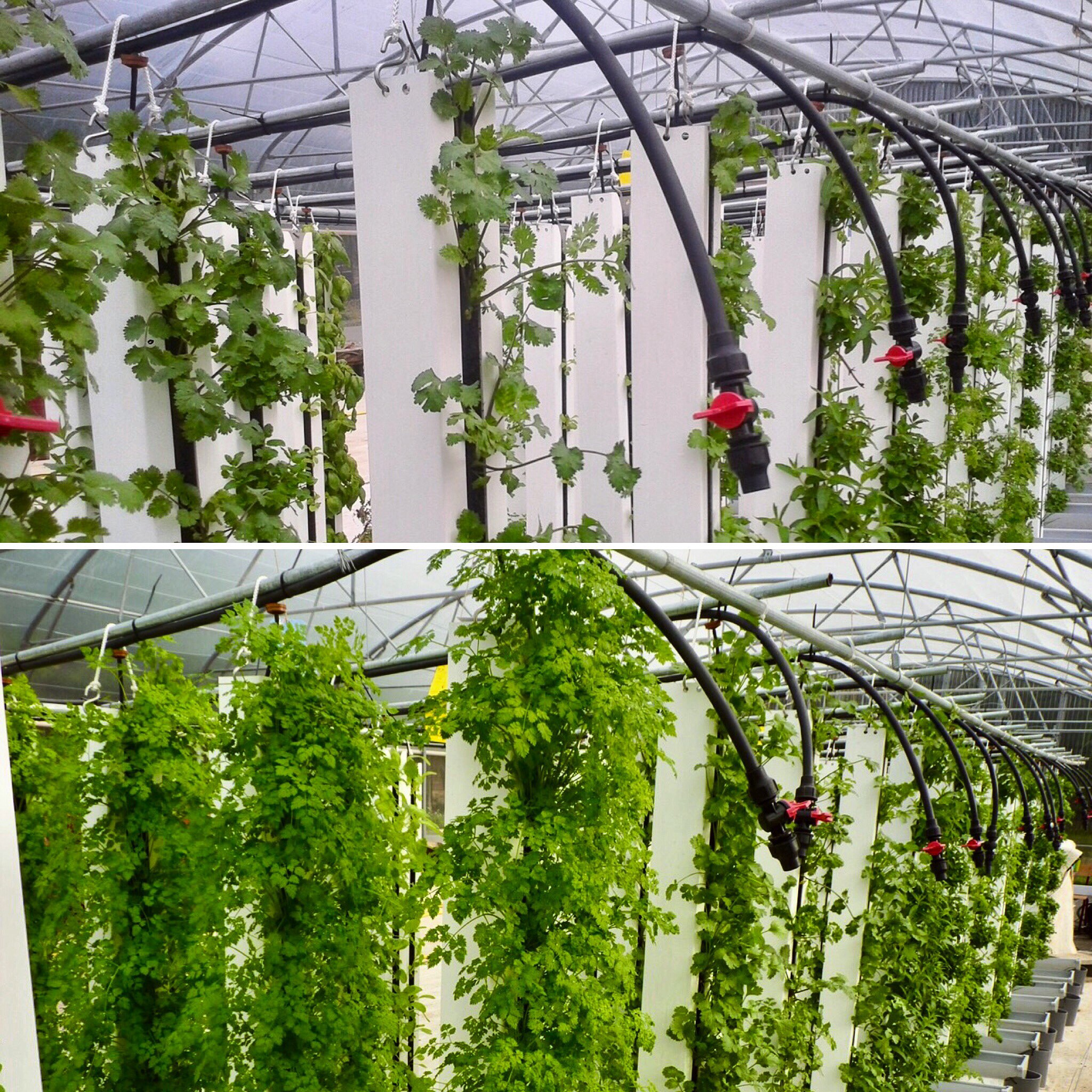 9 Reasons Why Vertical Farms Fail - Bright Agrotech - Medium