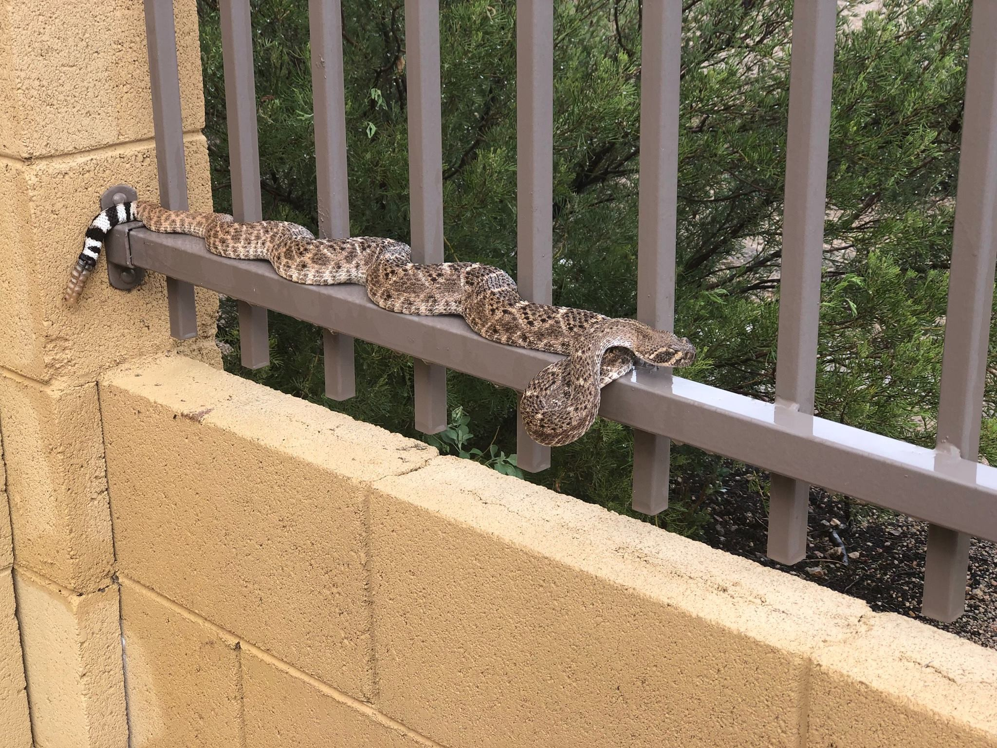 10 Important Things to Look for in a Rattlesnake Fence