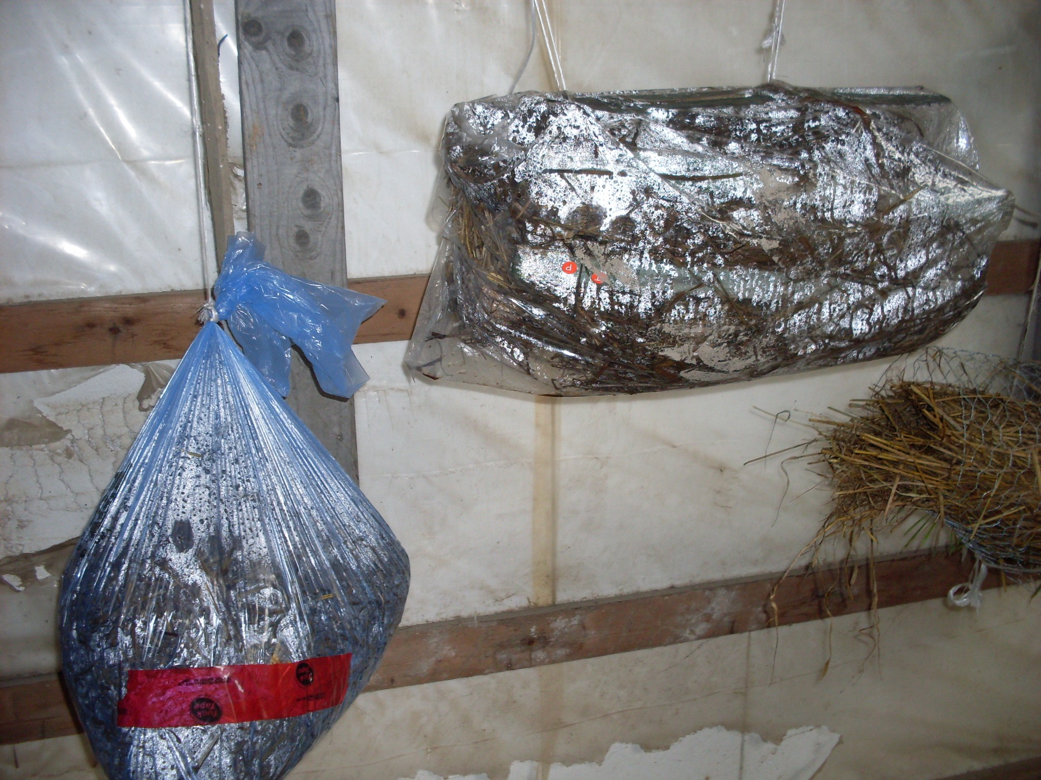 In search of: non-sterile mushroom cultivation tek