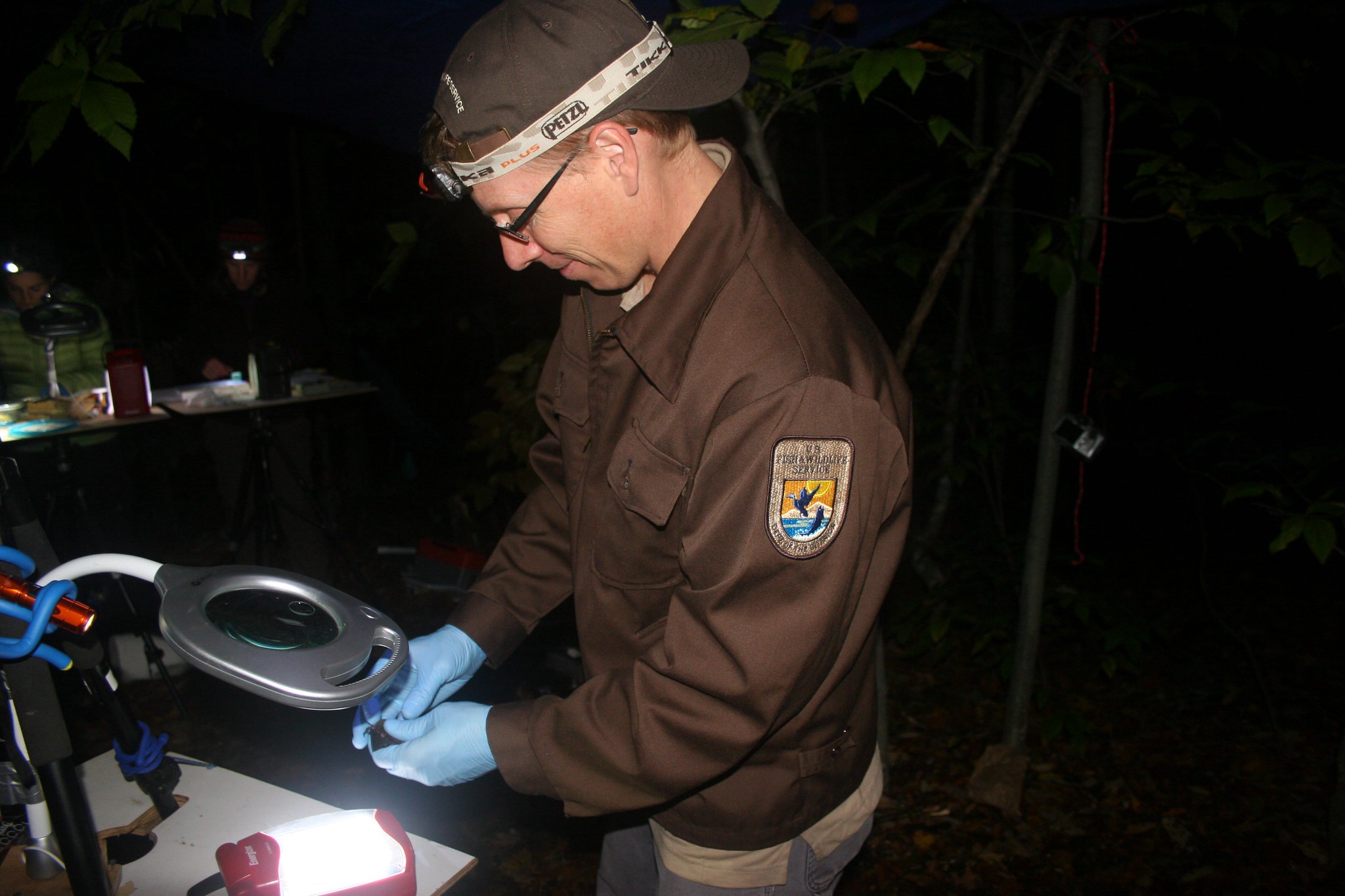 A person wearing a USFWS Jacket handles a bat under a light, working in the darkness of night