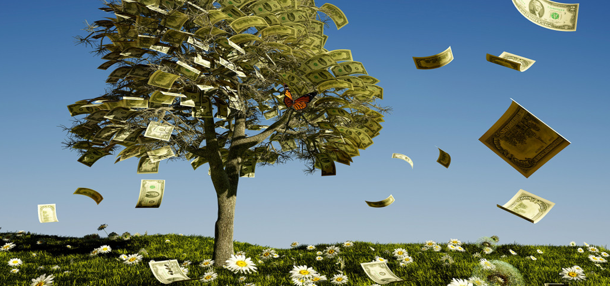 Image result for money on trees
