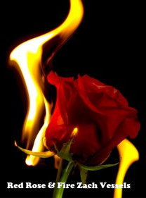 A red rose engulfed in flame yet not burning