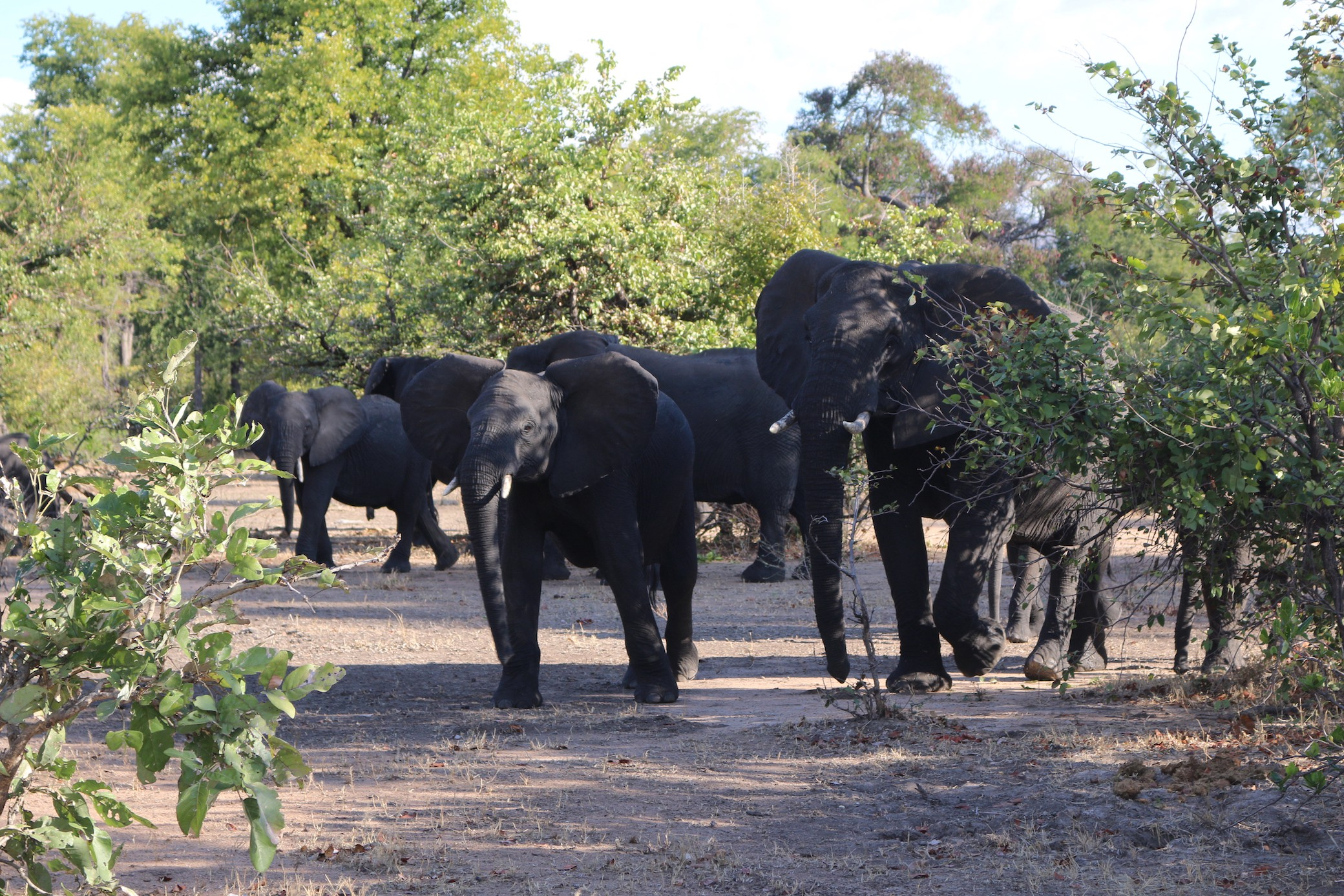 Poaching Patrol — On Foot In The Malawian Bush With The