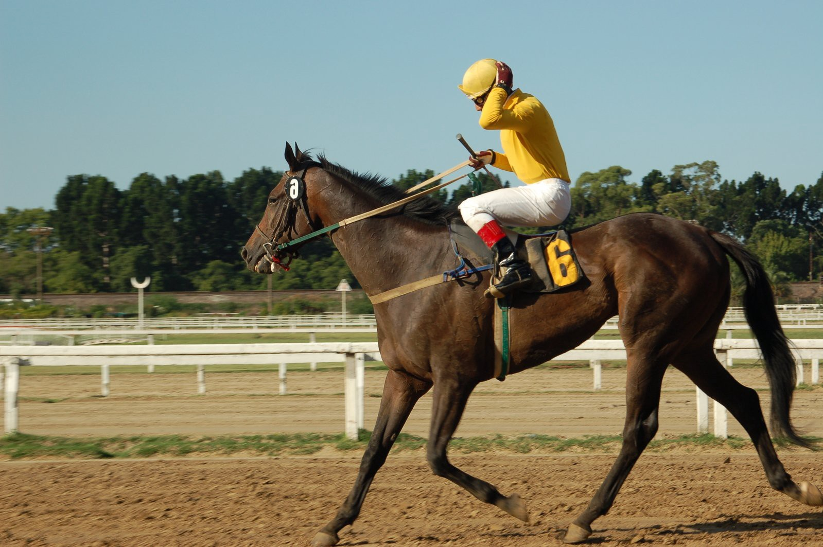 Online horse betting usa top nfl betting sites
