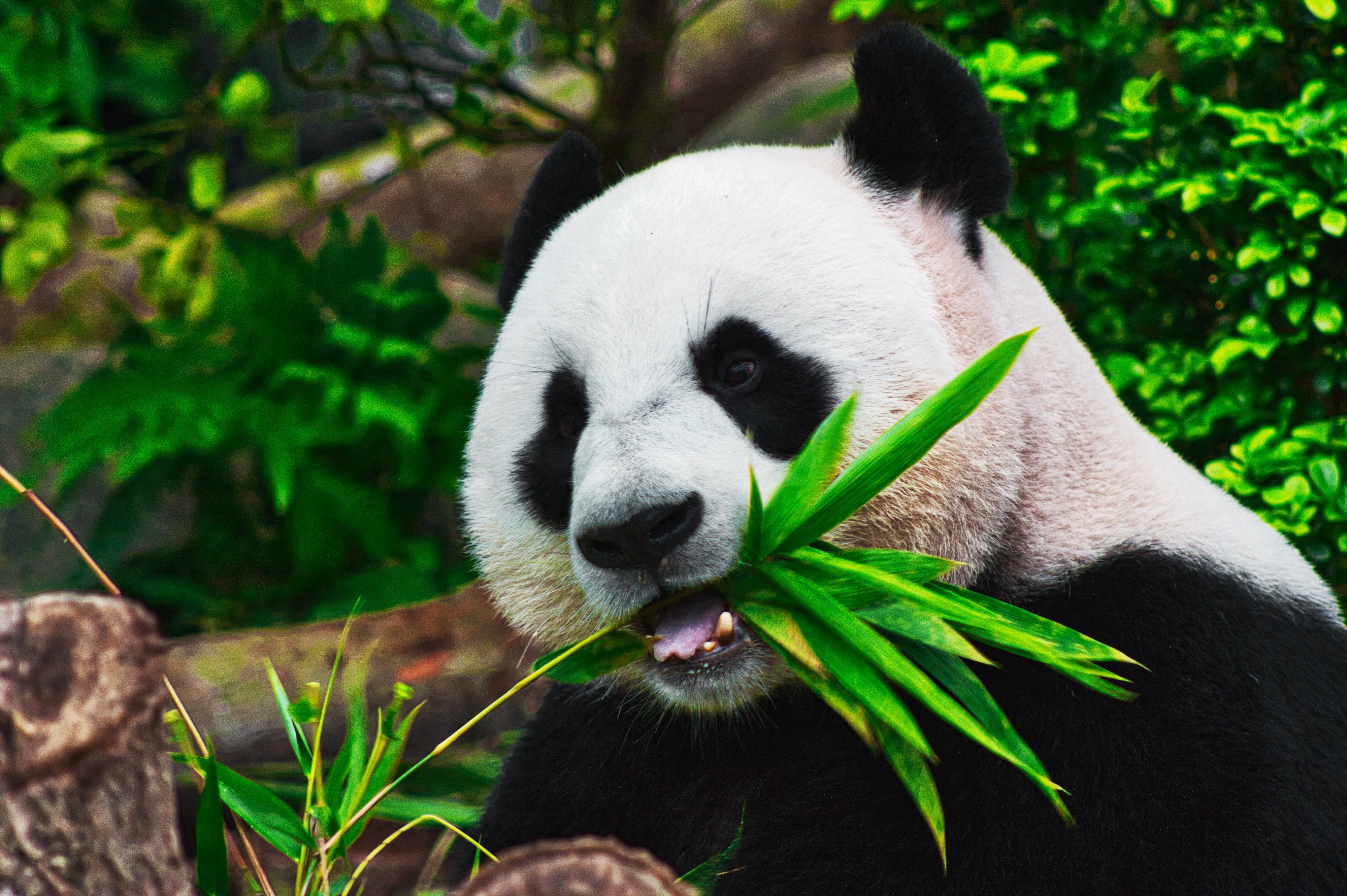 An End to End Guide for Getting Started with Pandas