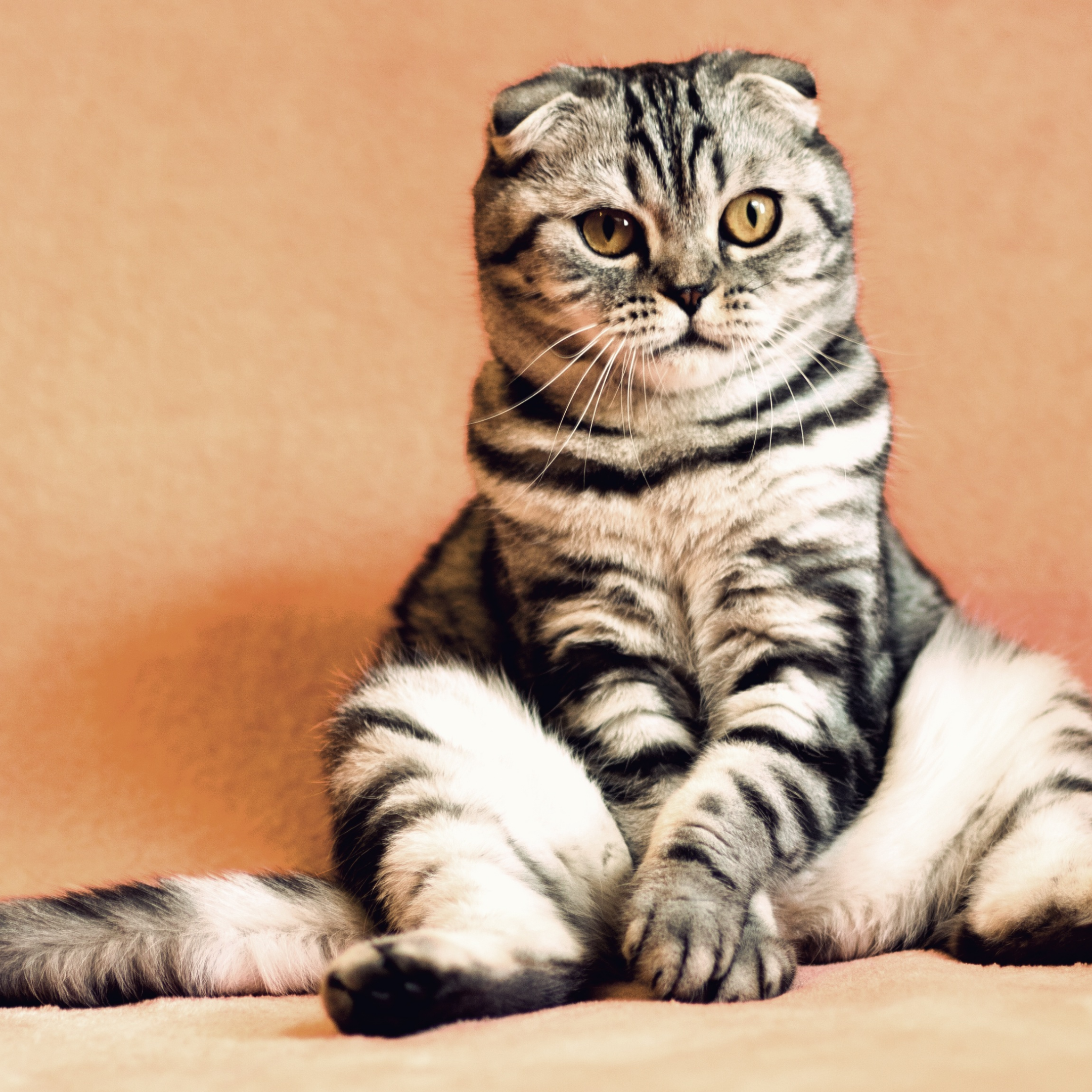 Is It Safe For Cats To Drink Almond Milk By Noman Mubarak Medium