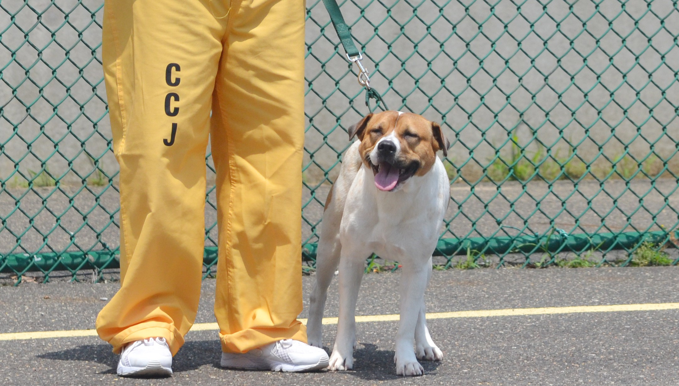 Weekly Roundup: Camden County inmates help train VAO dogs as