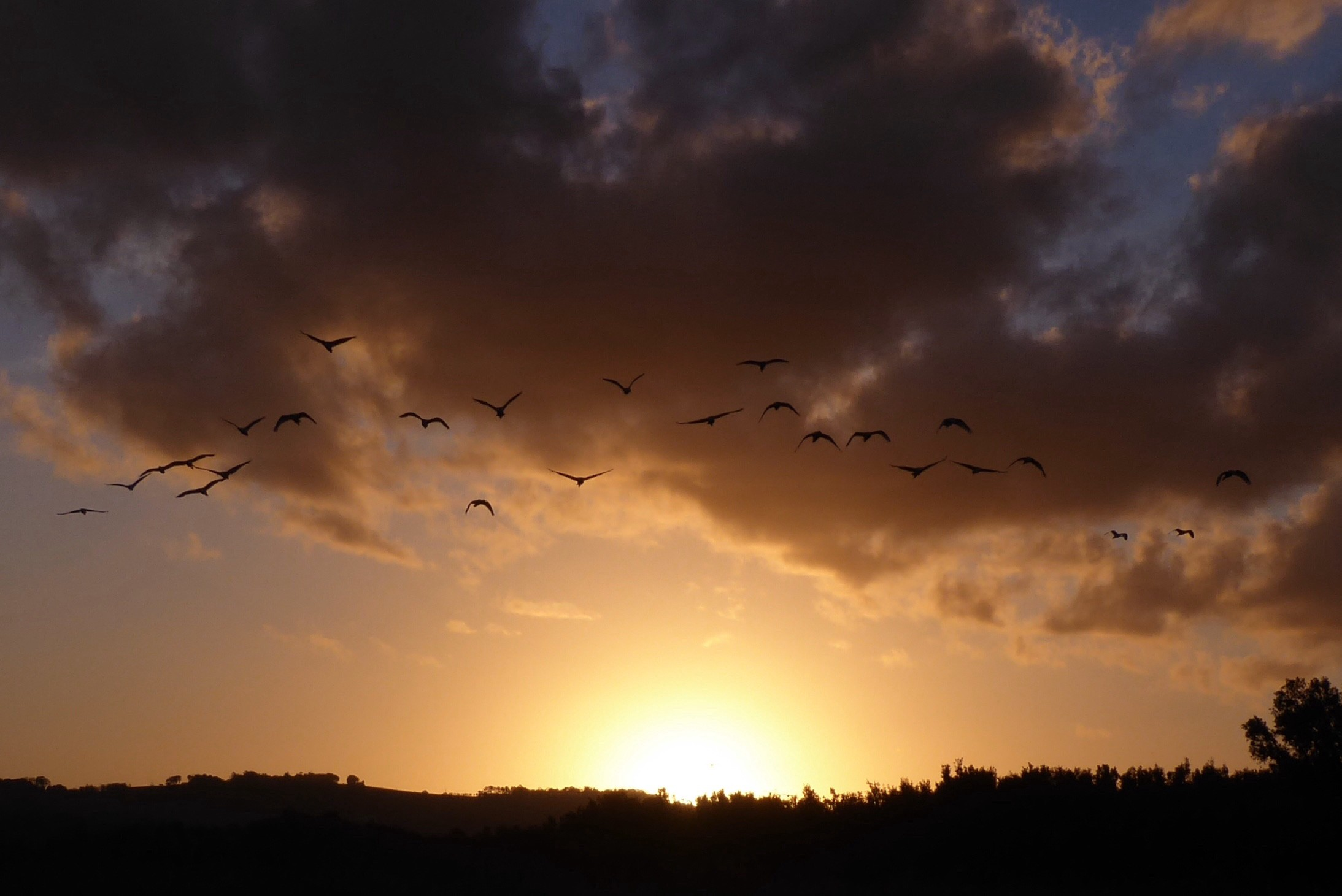 A sunset below the clouds with a line of ibis flying home to roost