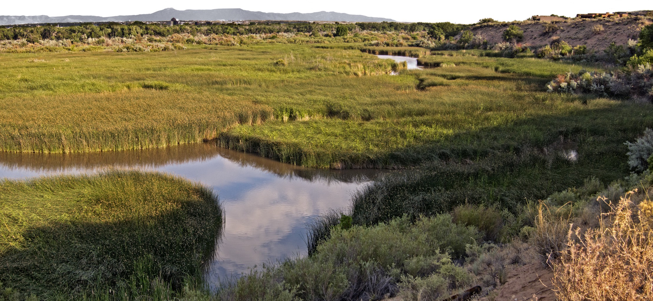 The San Antonio Oxbow wetland, looking south from the bluff.