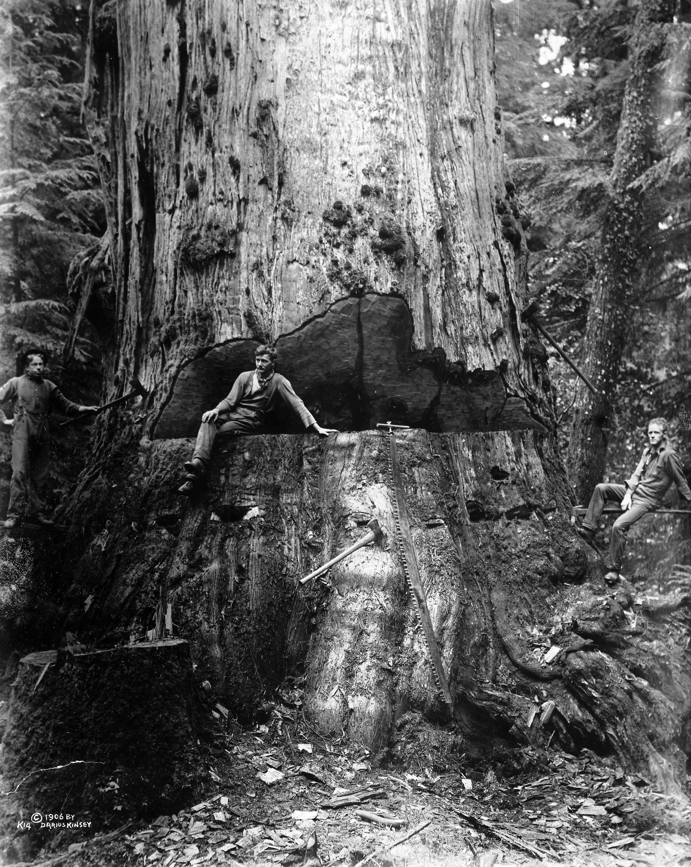 Early logging photos show the taming — and tarnishing — of