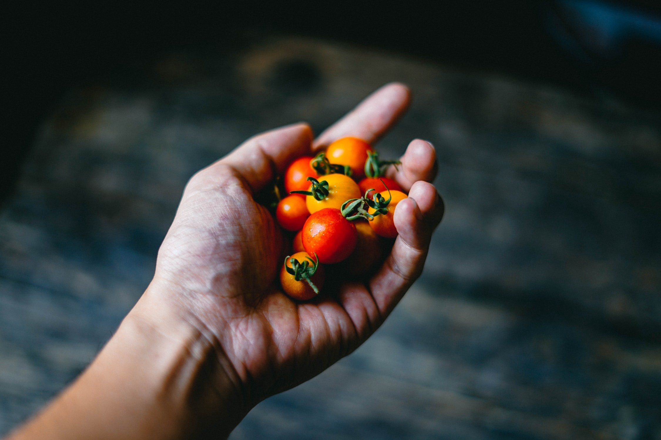 A hand holding about eight red and orange cherry tomatoes.