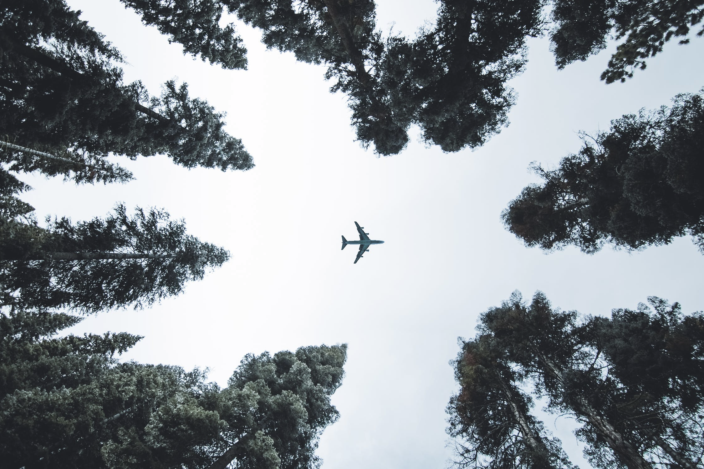 Plane seen flying above a forest.
