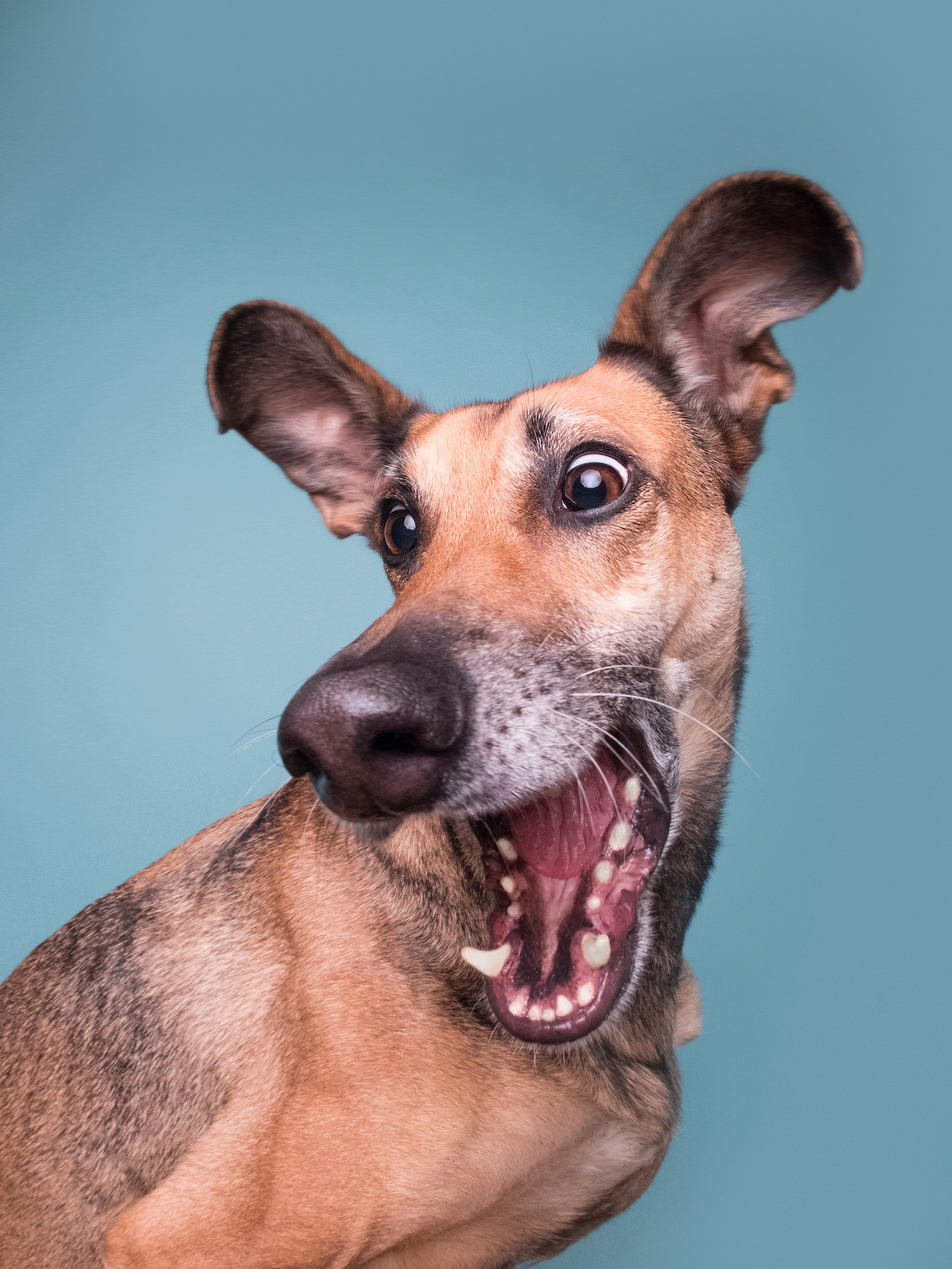 A dog with an exaggerated expression of surprise and delight