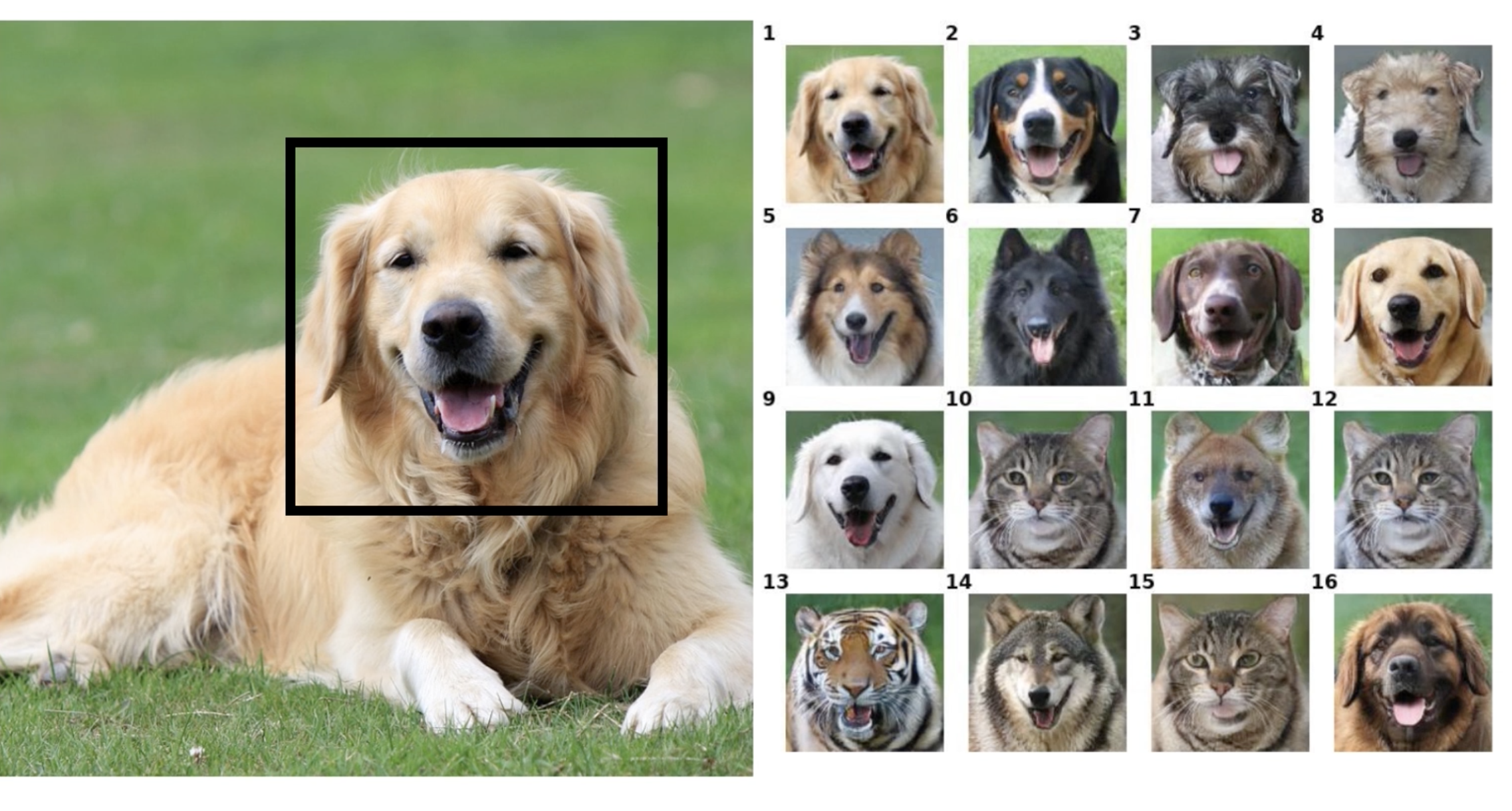 NVIDIA AI Enables Low-Data Face Swap for Pets - SyncedReview