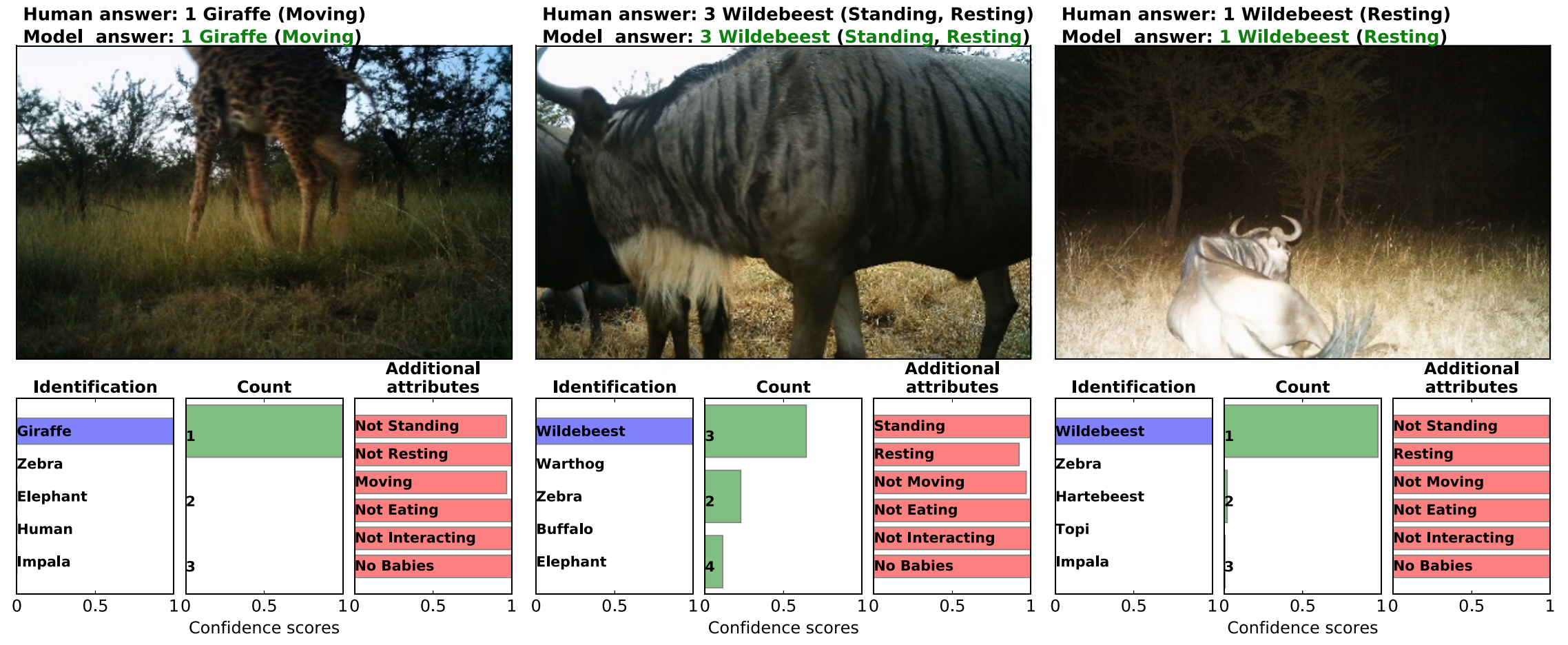 Automated Animal Identification Using Deep Learning Techniques