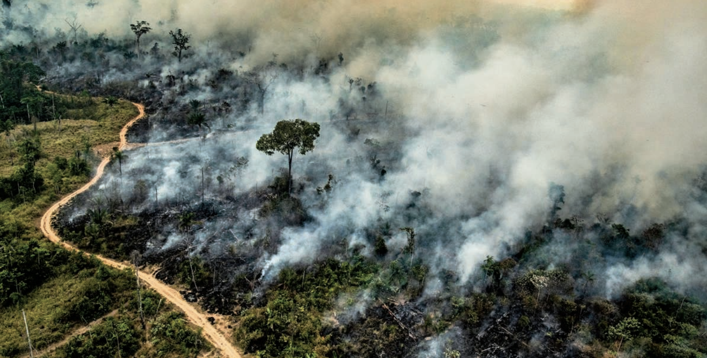 An Analysis Of Amazonian Forest Fires Towards Data Science