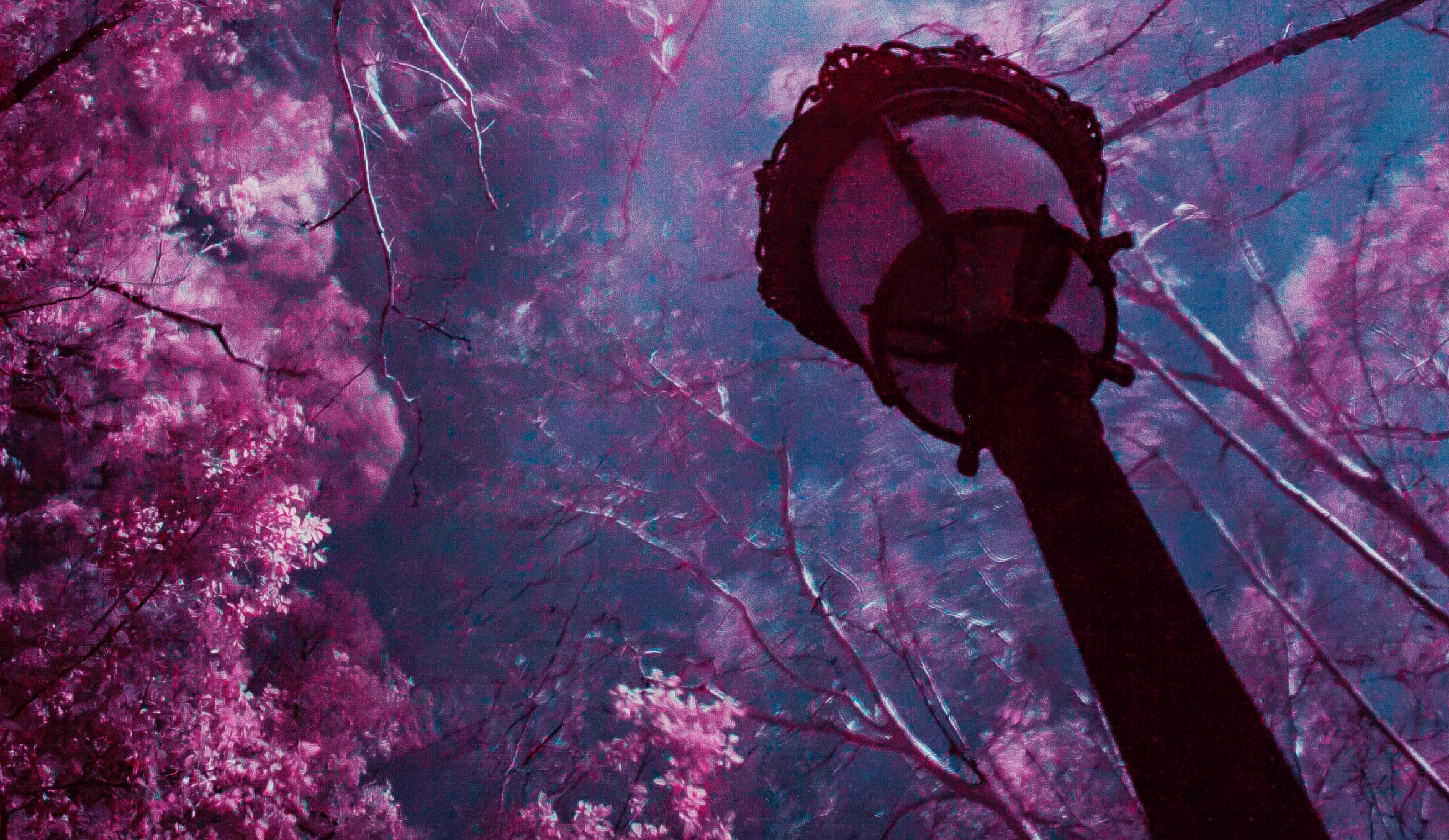 A facing-upwards image of an old fashioned lamp with some lit up trees in the background. The entire image is tinted purple.