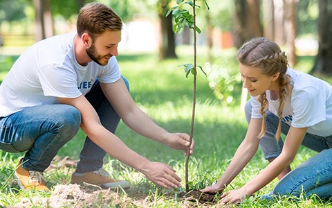 A Beginners Guide to Tree Planting   by 72 Tree Removal Services   Medium