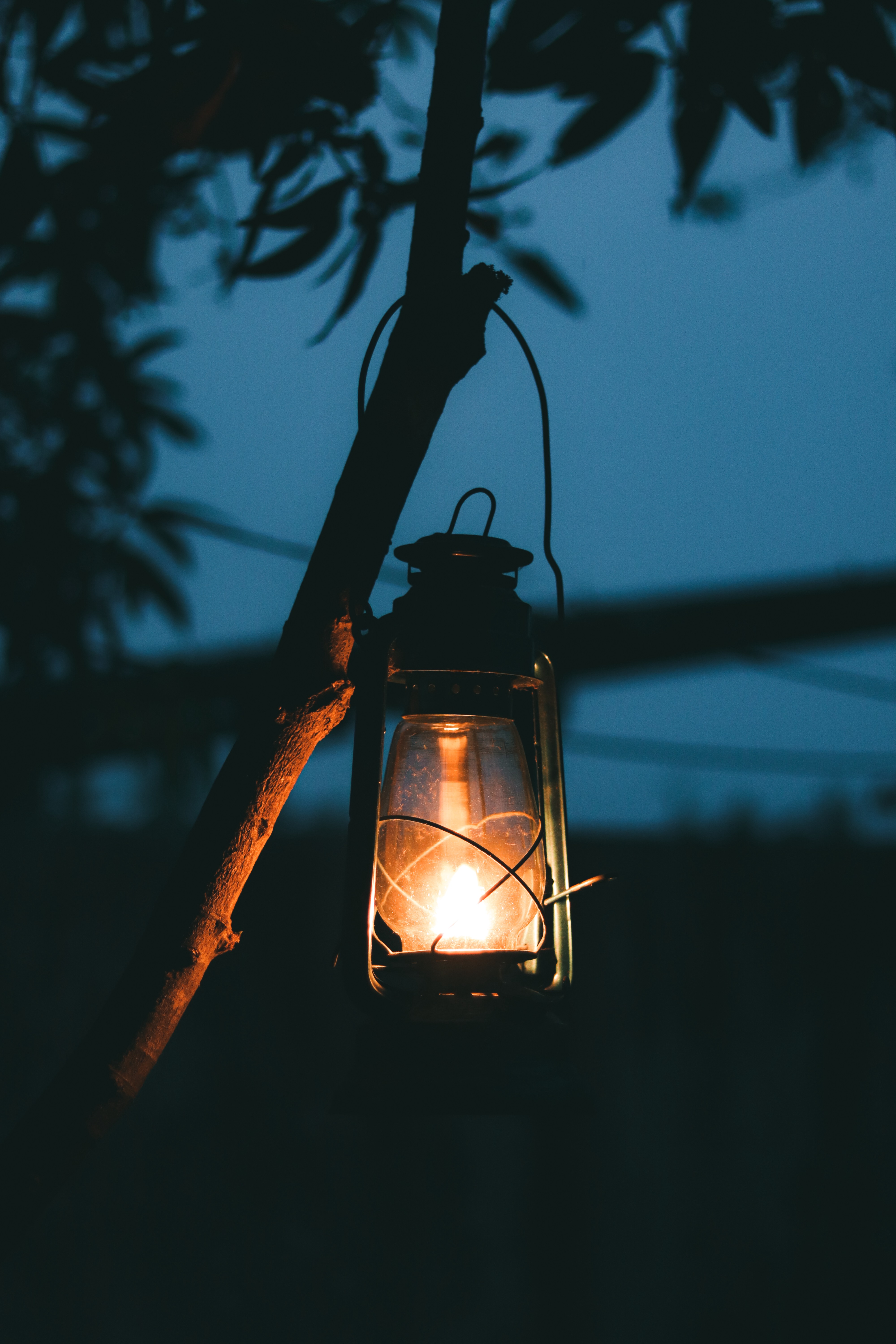 the image is that of a lantern hung on the branch of a tree shining its light into a dark night.