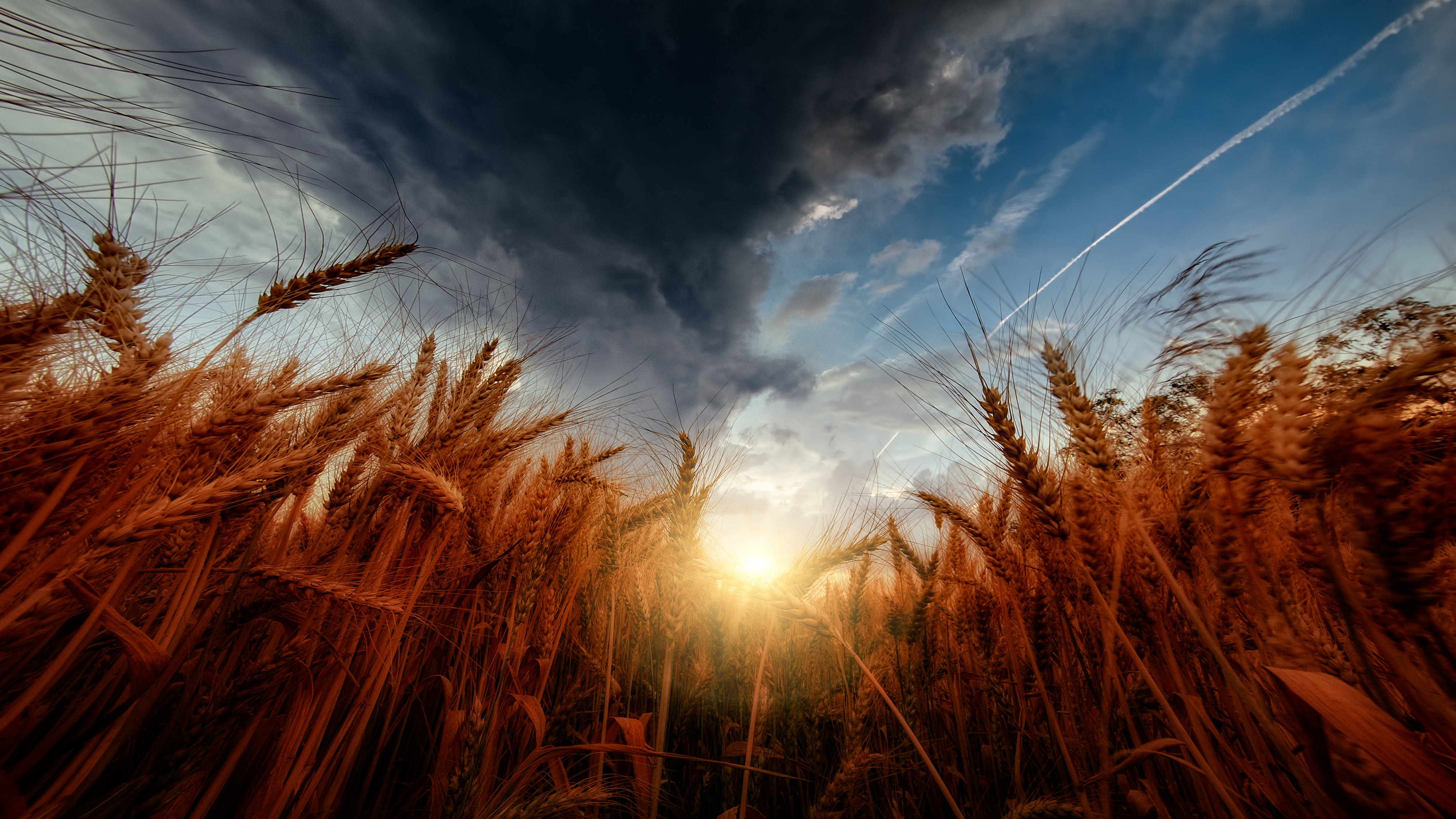 A sun shines over a wheat field through a darkened sky